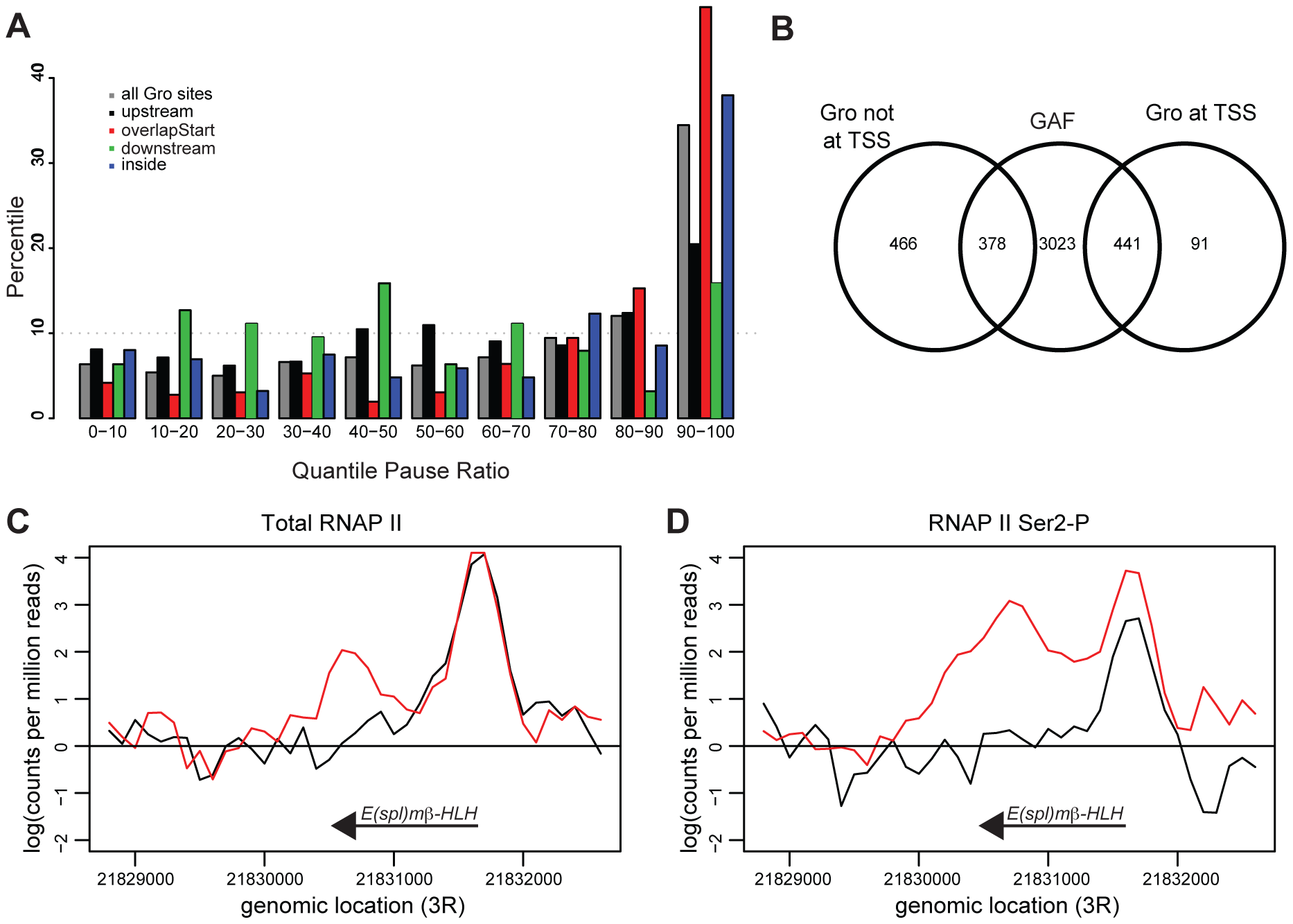Gro is enriched at genes that exhibit RNAP II promoter proximal pausing.