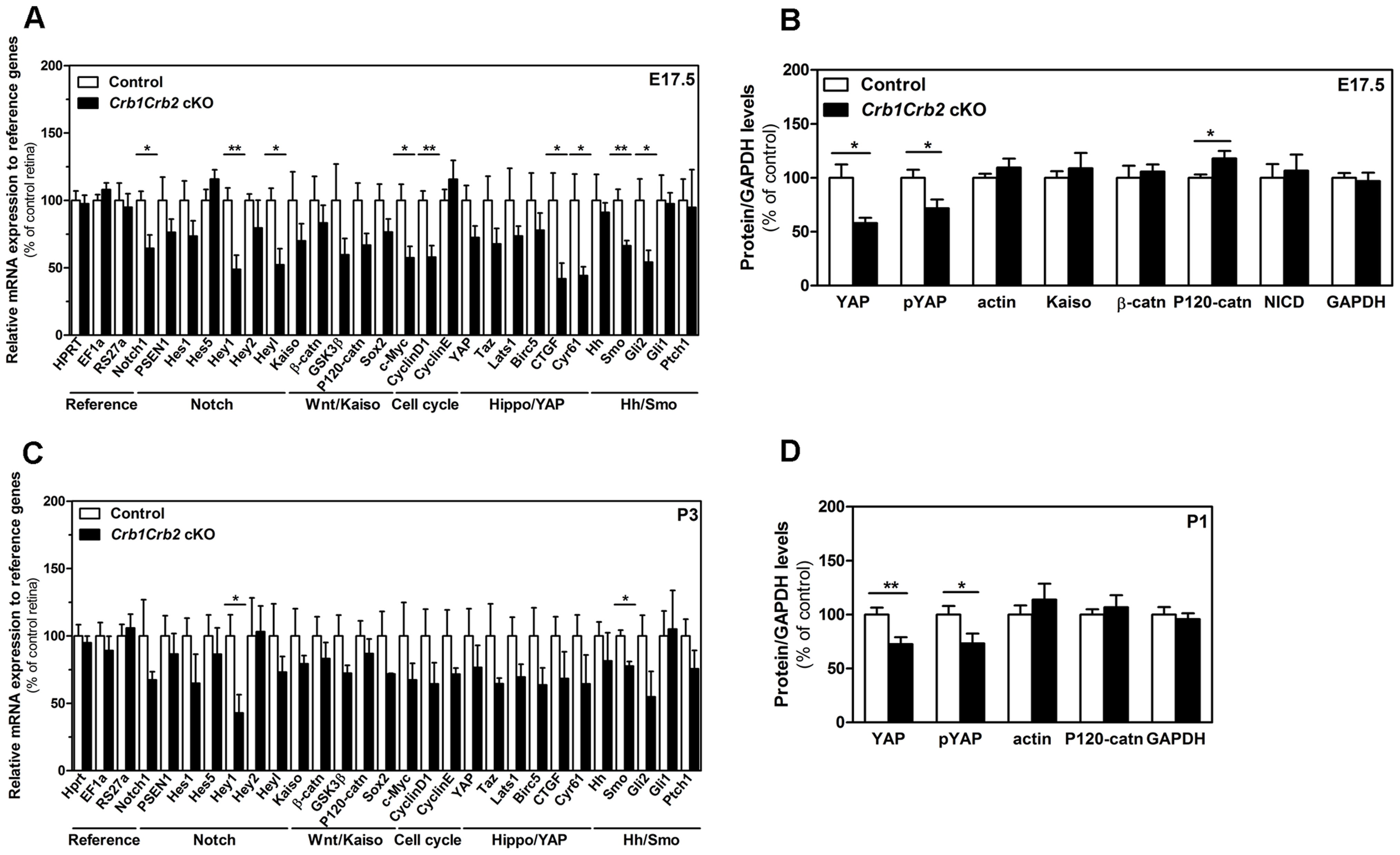 CRB1 and CRB2 acts on the proliferative signalling pathways.