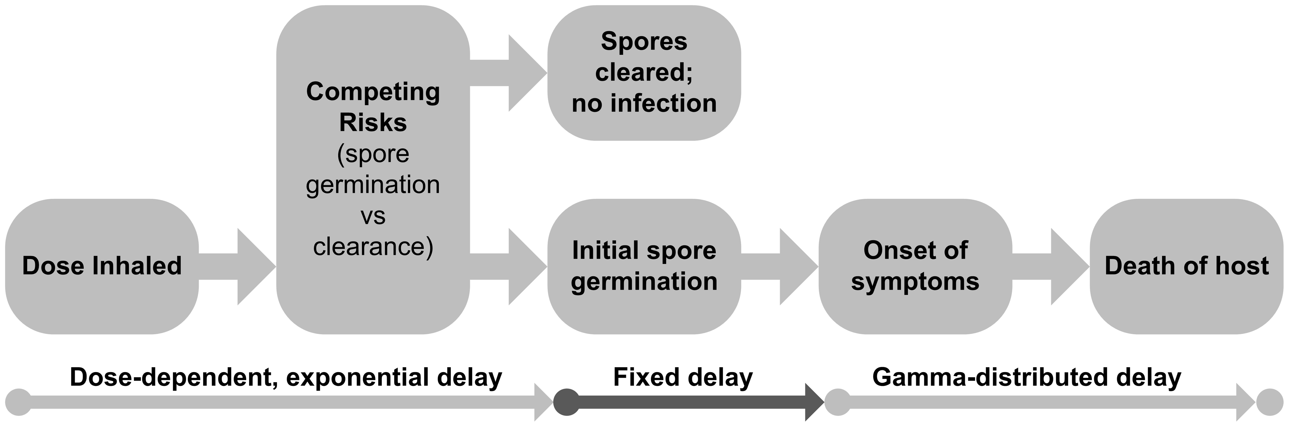 Schematic of the determination of infection and the infection timeline for anthrax.