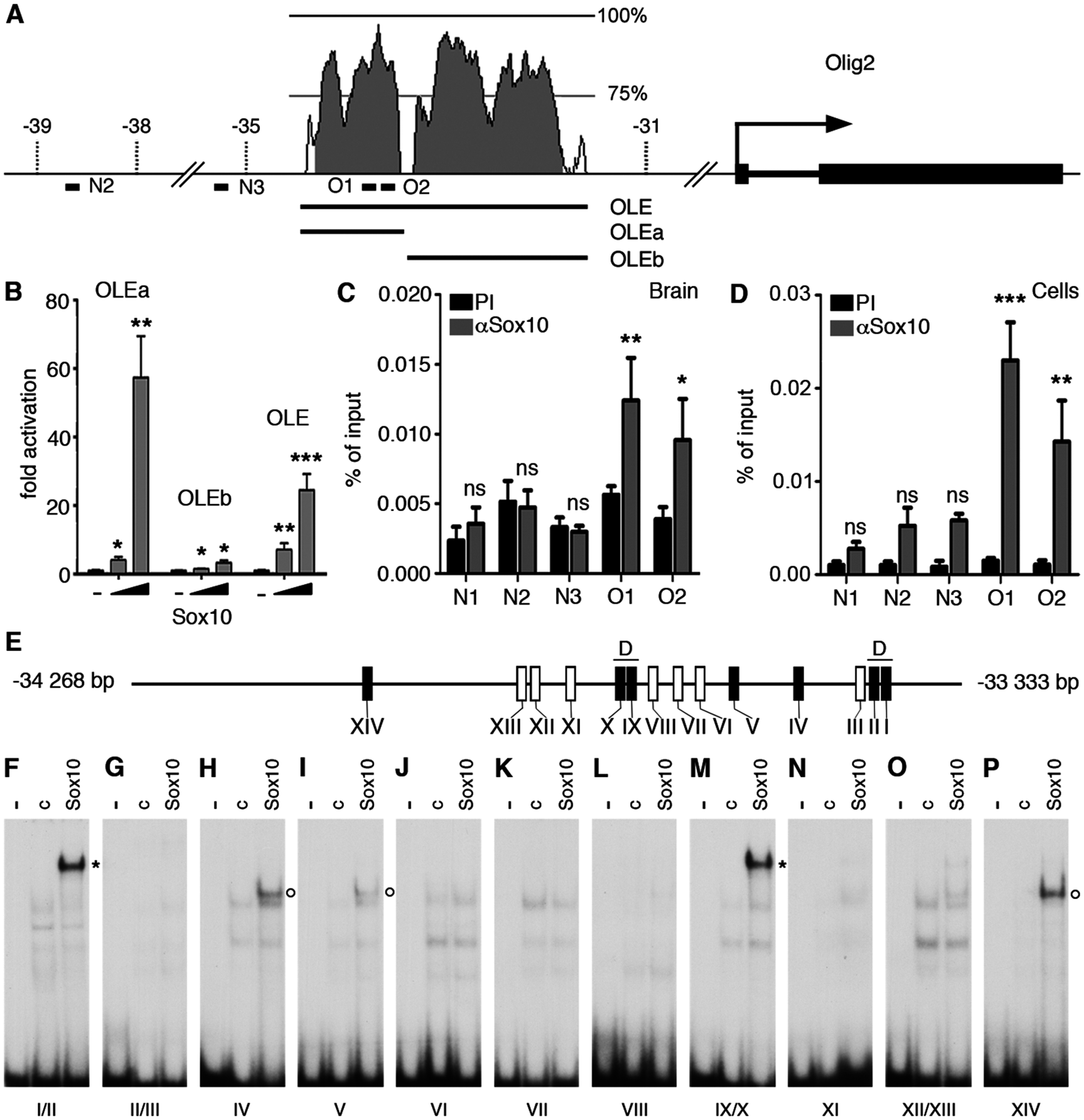 The evolutionary conserved OLE and its OLEa subfragment are directly activated and bound by Sox10.