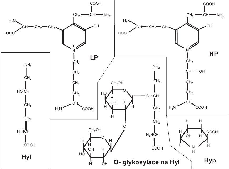 Stavební elementy víceméně nebo výhradně specifické pro kolagen: hydroxyprolin (Hyp), hydroxylysin (Hyl), O-glykosylace na hydroxylysinu, příčné vazby hydroxylysylpyridinolin (HP) a lysylpyridinolin (LP).