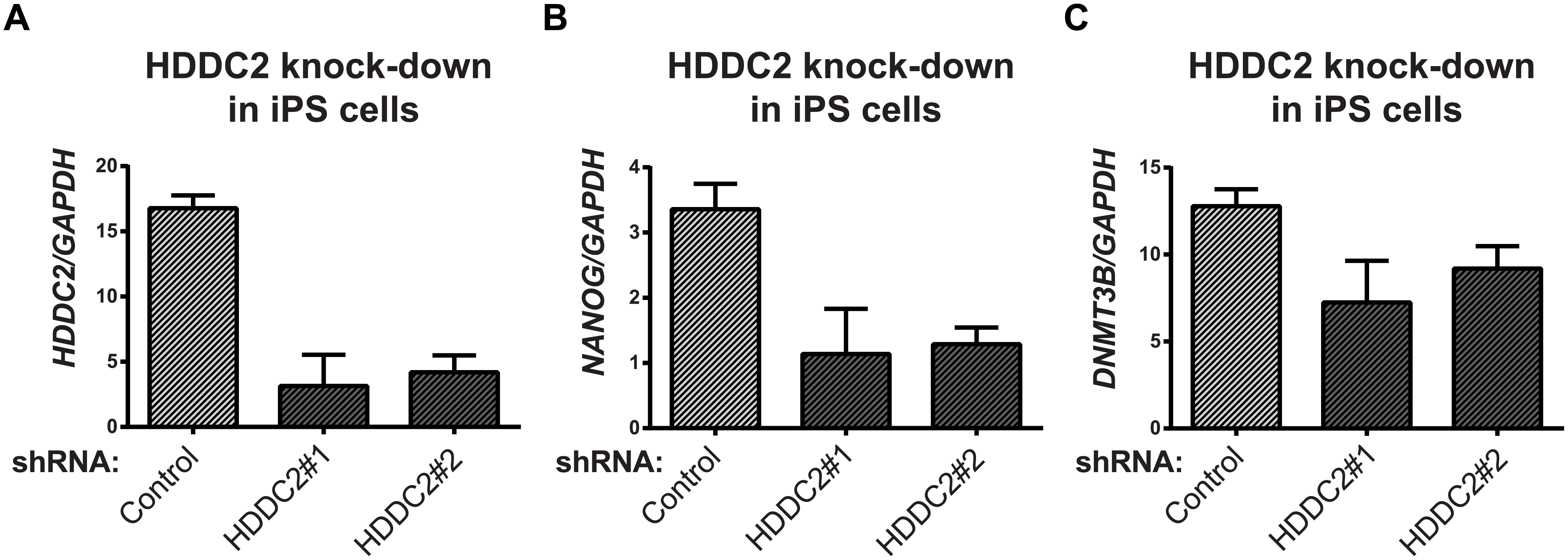 Effect of <i>HDDC2</i> shRNA-mediated knock-down.