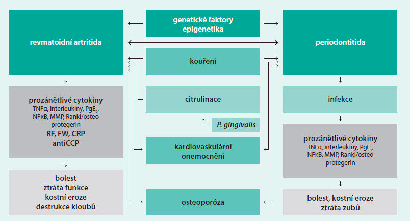 Schéma. Možné vzájemné vztahy a rysy PD a RA (upraveno dle [12])