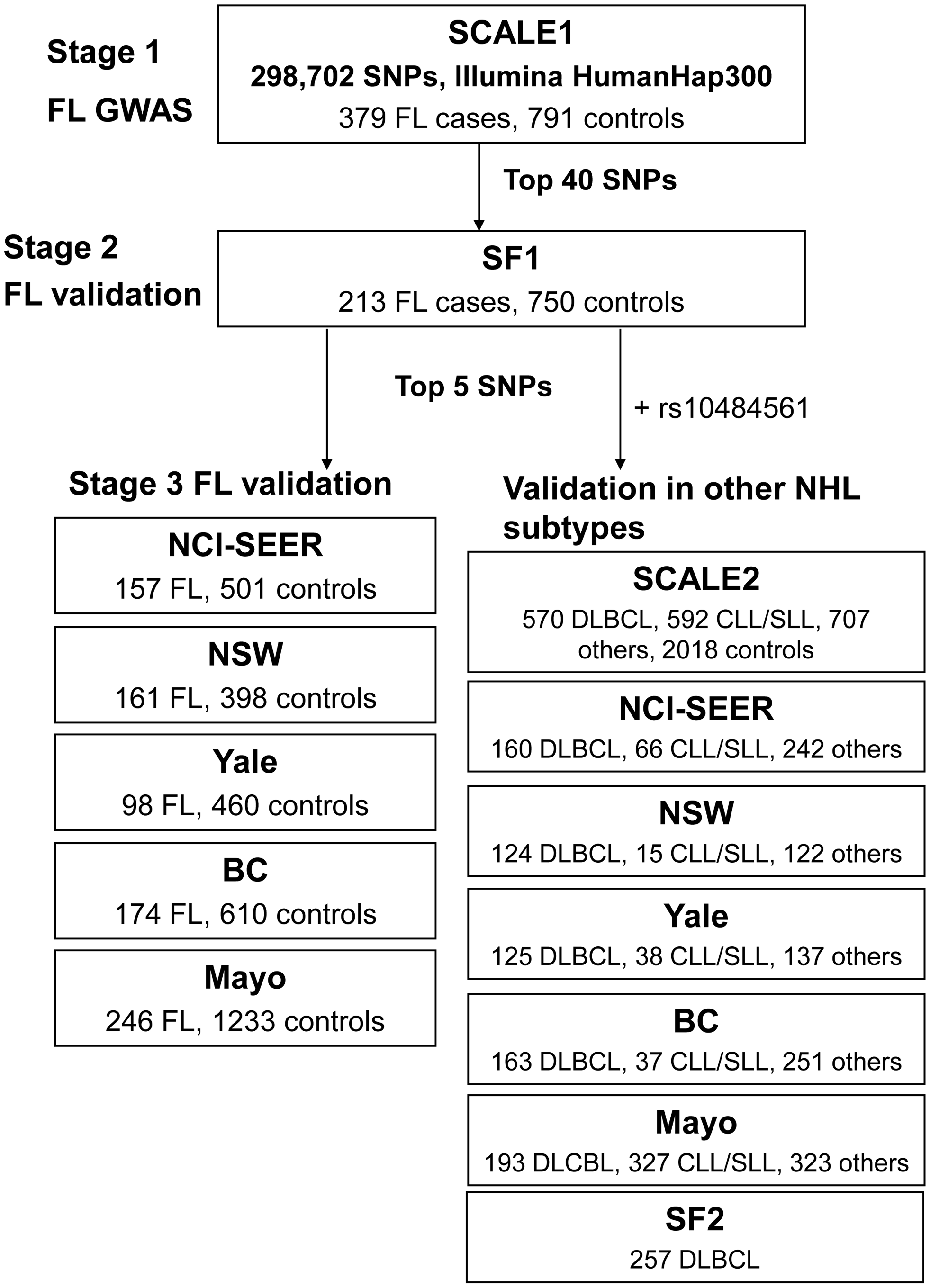 Schematic representation of the three-stage study design.