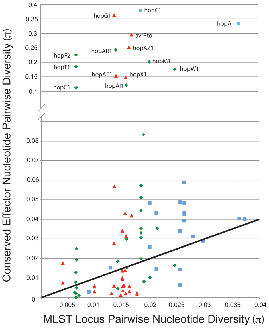 A minority of shared TTE alleles display elevated levels of nucleotide divergence.