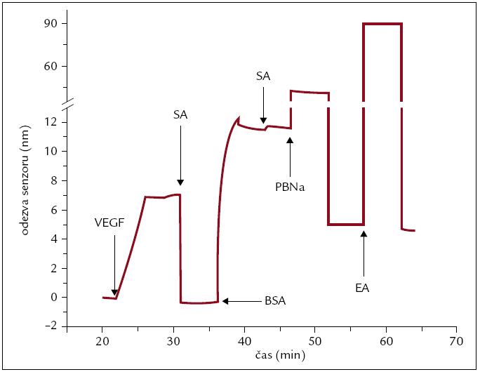 Odezva SPR senzoru na imobilizaci vaskulárního endoteliálního růstového faktoru A (VEGF-A) a BSA na aktivovaný povrch SPR čipu.