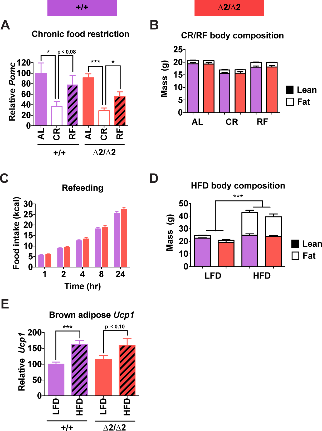 Physiological responses of male nPE2 mutant mice to altered nutrition.