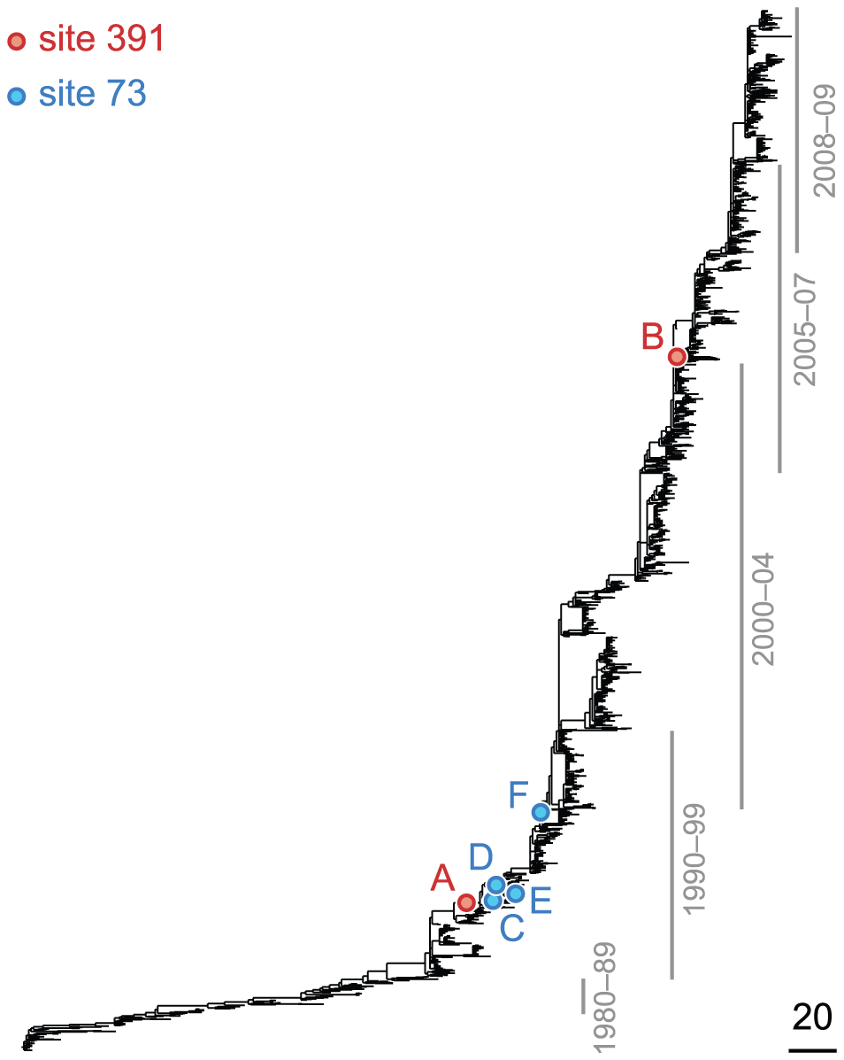 Phylogenetic tree of HA (subtype H3) illustrating a putatively epistatic interaction between sites 391 (red circles) and 73 (blue circles).