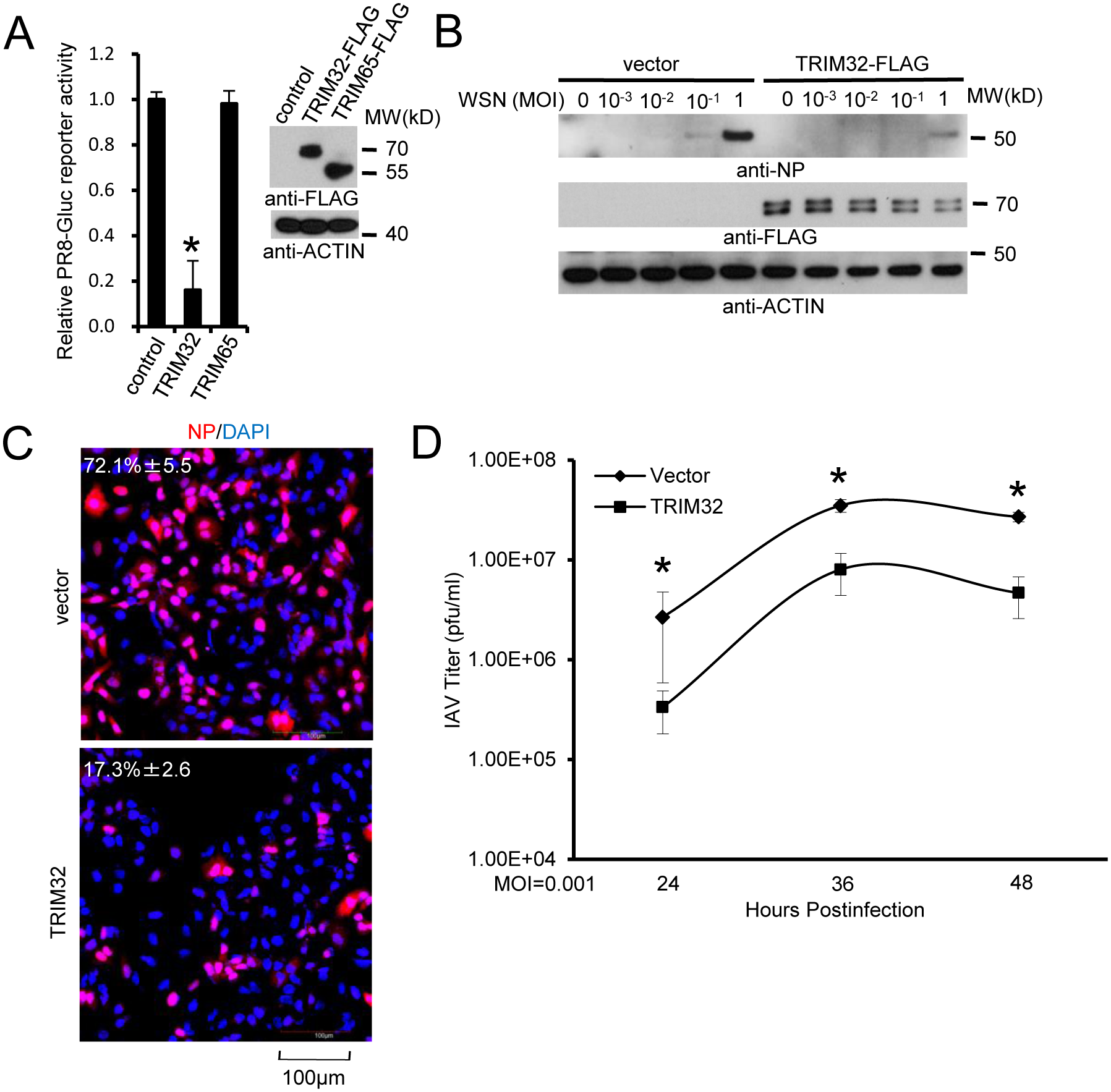 TRIM32 attenuates influenza A virus infection.