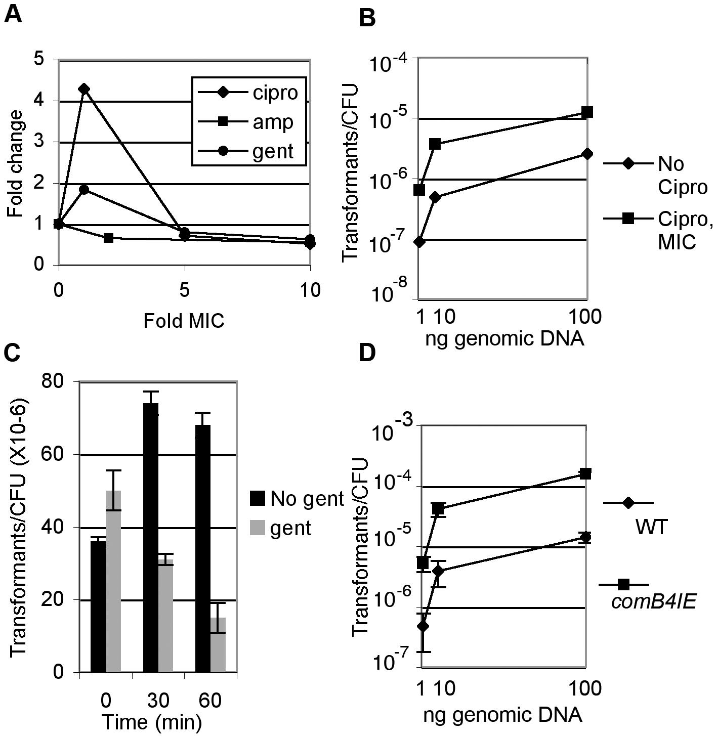 DNA damage increases natural transformation.