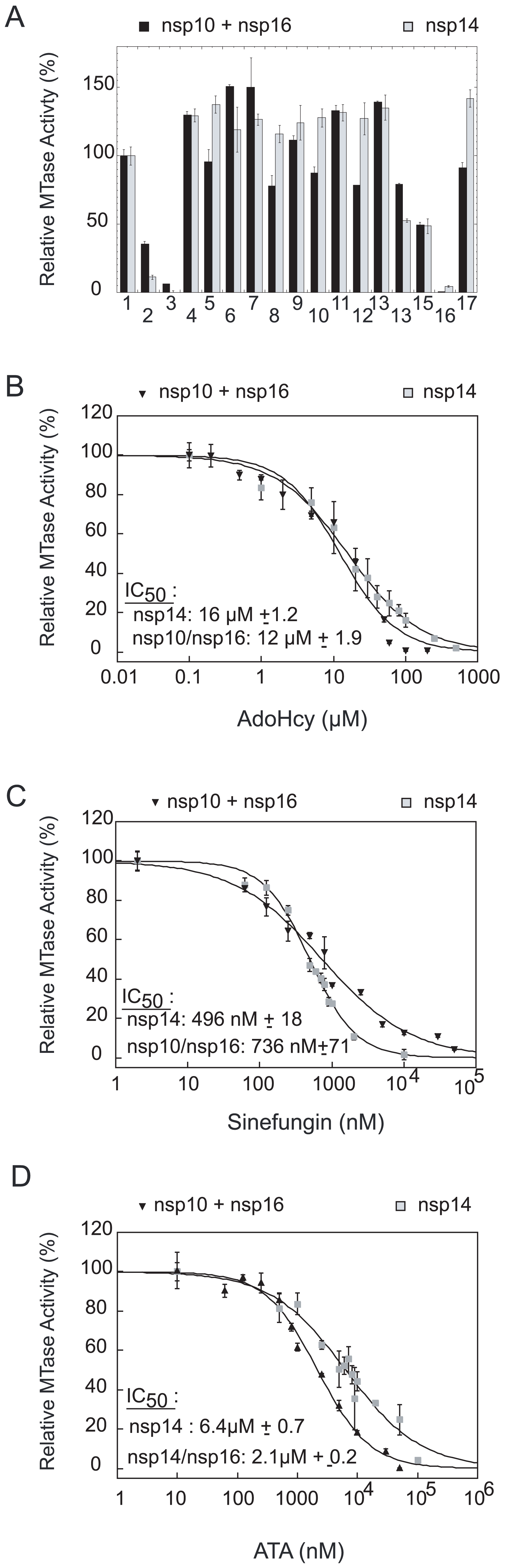 Inhibition of the nsp14 and nsp16/nsp10 MTase activities.
