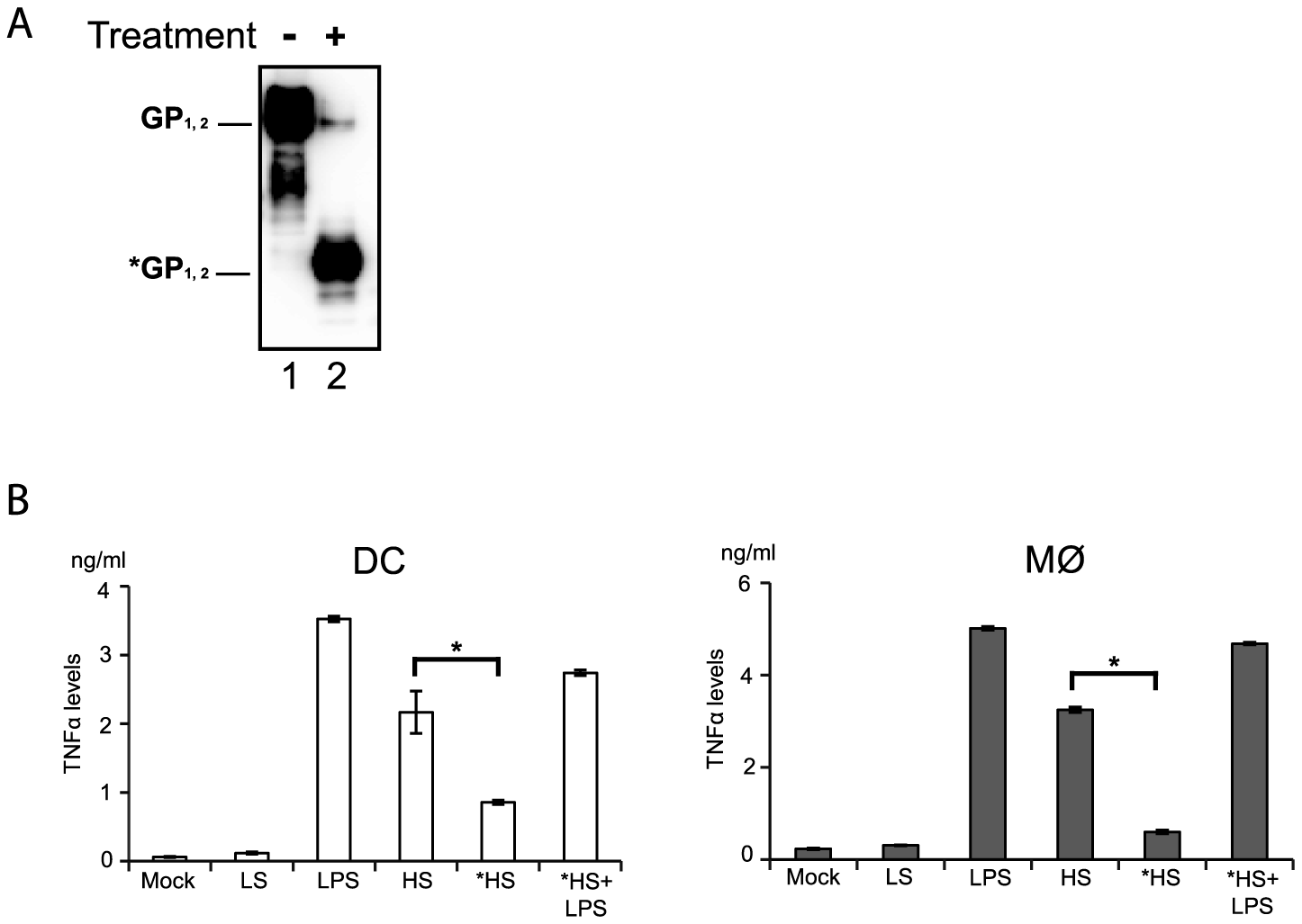 Deglycosylation of shed GP affects activation of DCs and macrophages.