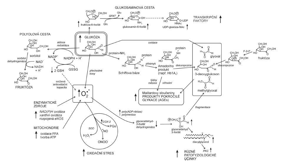 Oxidační stres a hyperglykémie v patofyziologii diabetu (dle 26) COX-2 – izoforma 2 cyklooxygenázy, SOD – superoxid dismutáza, PKC – proteinkináza C, F-3-P – fruktóa 3-fosfatáza, GFAT – glutamin: fruktóza 6-fosfát aminotransferáza, Gln – glutamin, Glu – glutamát, PGs – prostaglandiny
