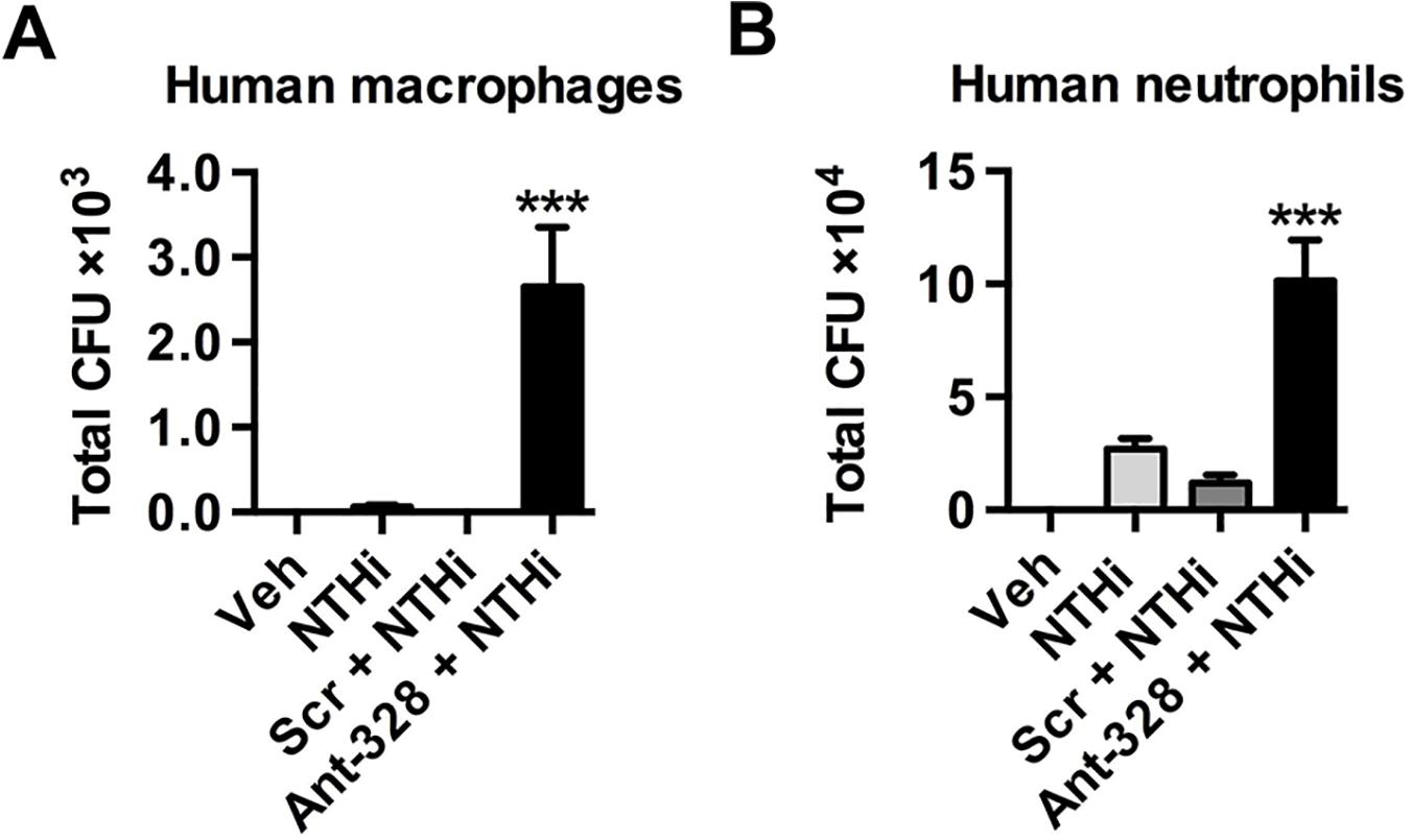 Inhibiting miR-328 increases bacterial uptake in human monocyte-derived macrophages and neutrophils.