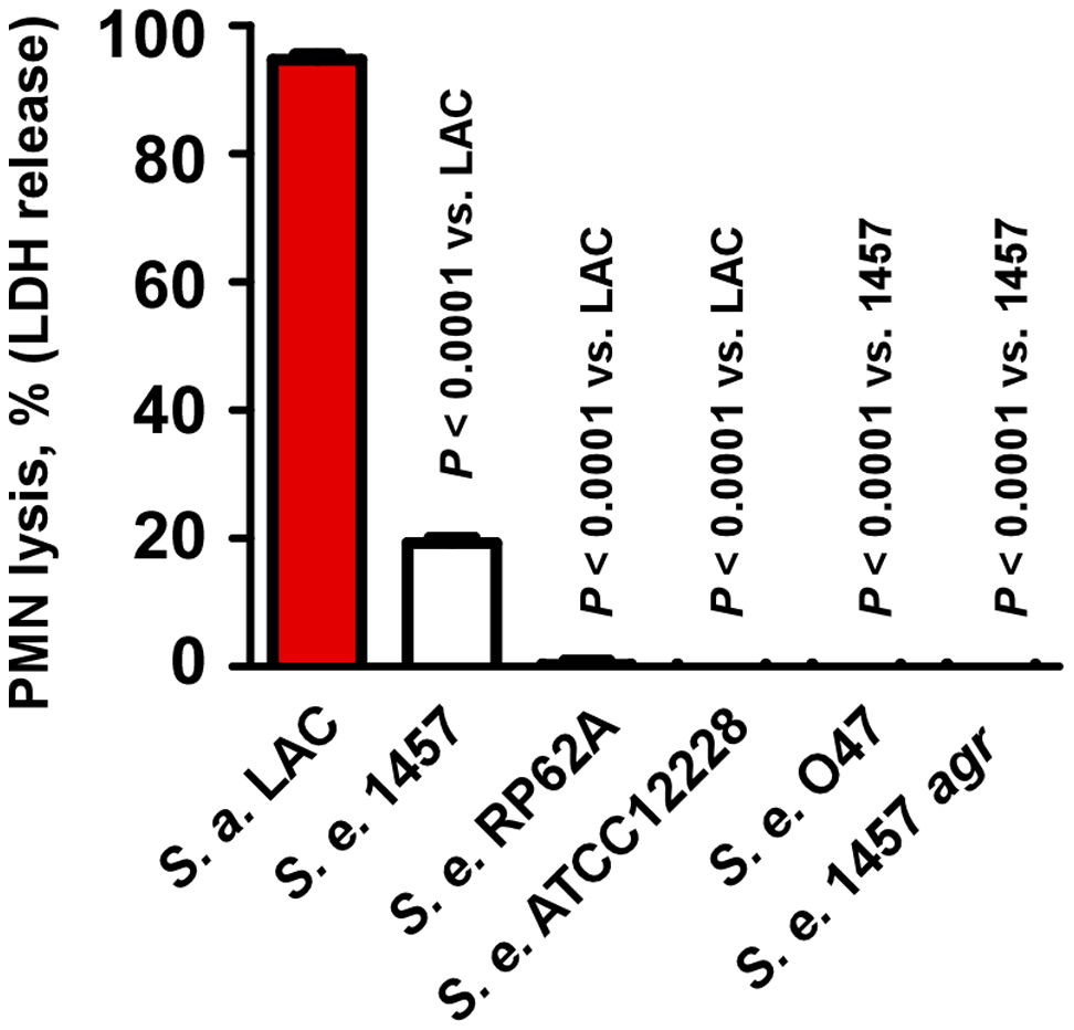 Neutrophil lysis by <i>S. epidermidis</i> culture filtrates.