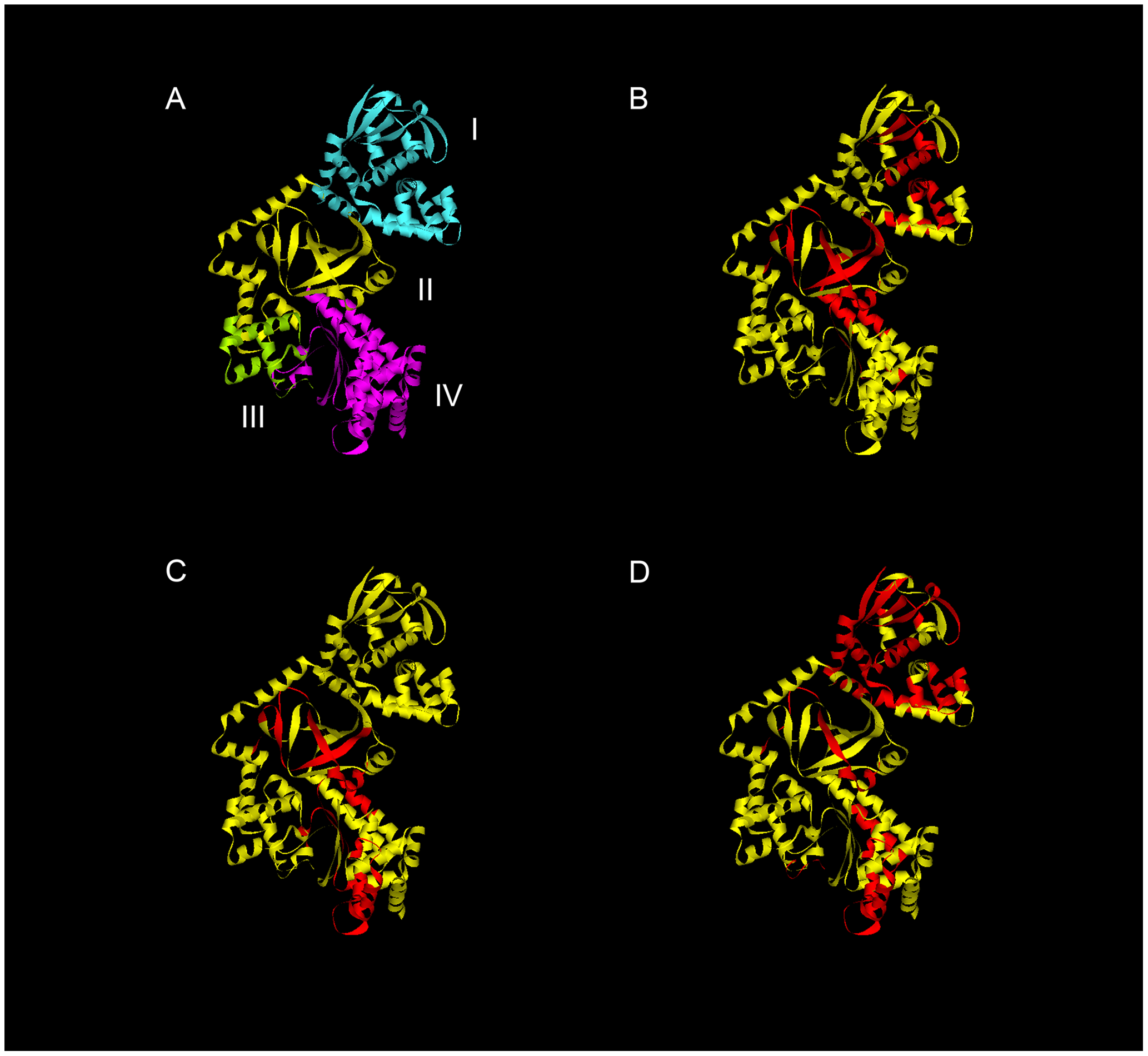 Regions HLA-DR and DQ-presented anthrax LF epitopes mapped onto the LF protein structure reveals clustering of immunogenic epitopes.