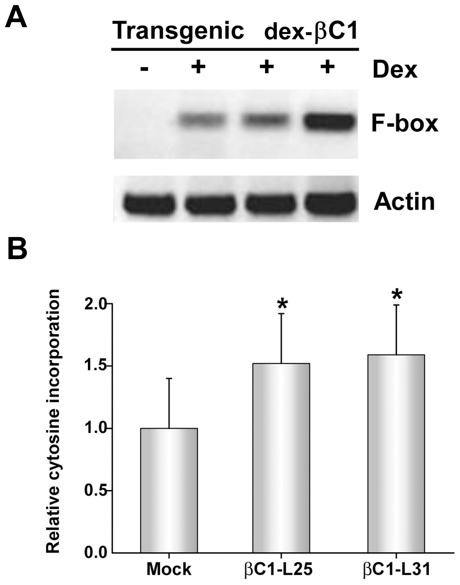 Transgenic expression of βC1 inhibits methylation and suppresses epigenetic TGS.