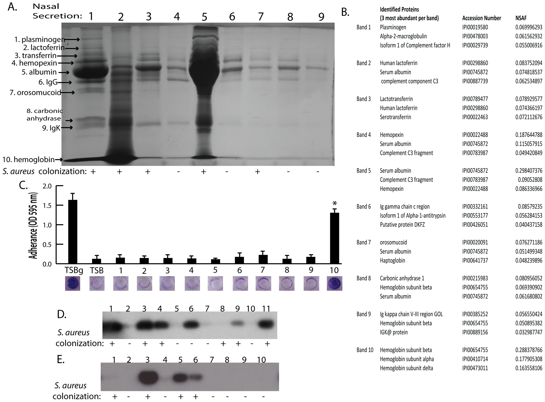 Nasal secretion proteins and their ability to promote <i>S. aureus</i> surface colonization.