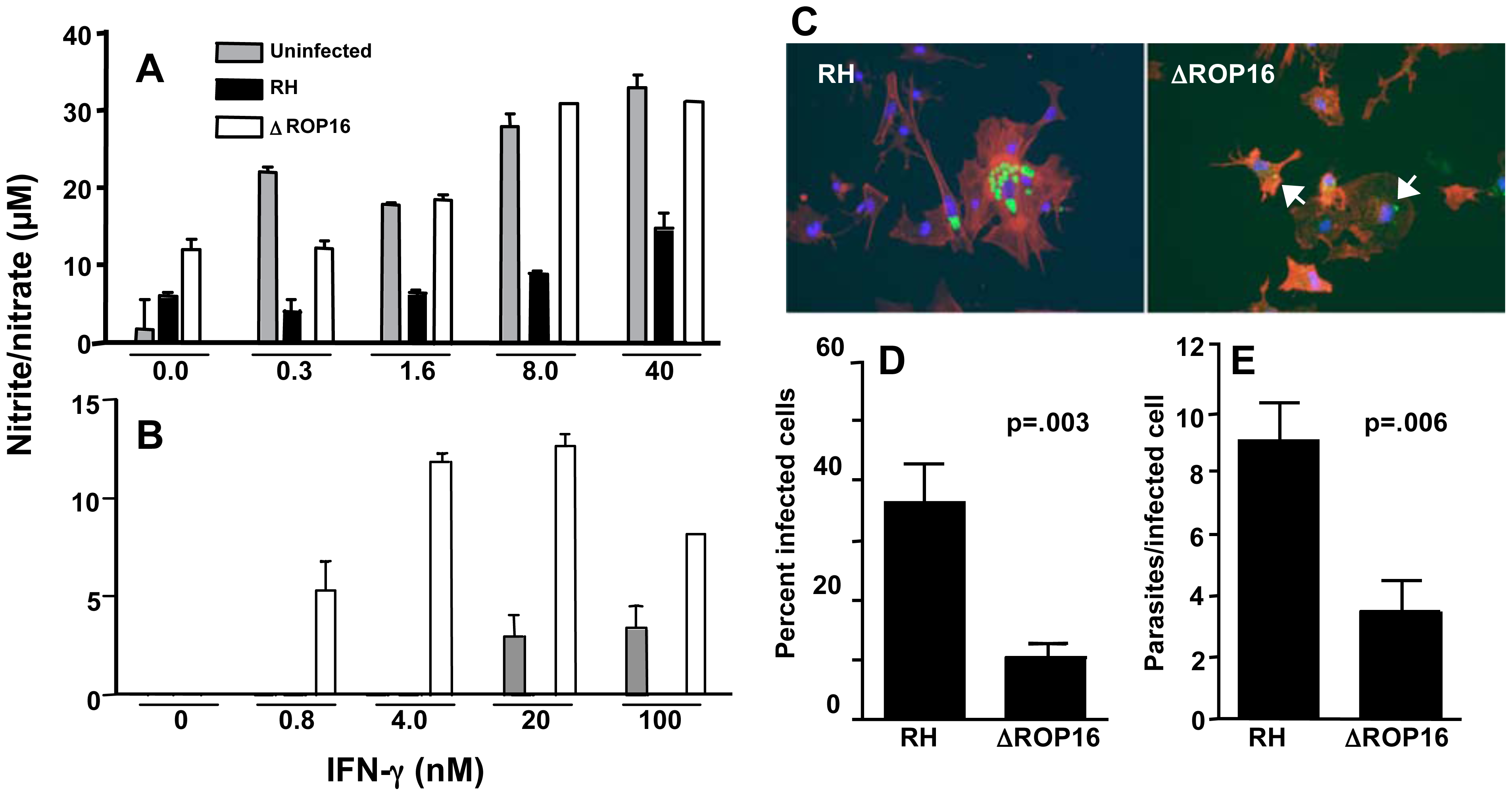 ΔROP16 tachyzoites do not inhibit IFN-γ primed NO production in microglial cells and ΔROP16 parasites potentiate production in astrocytes.