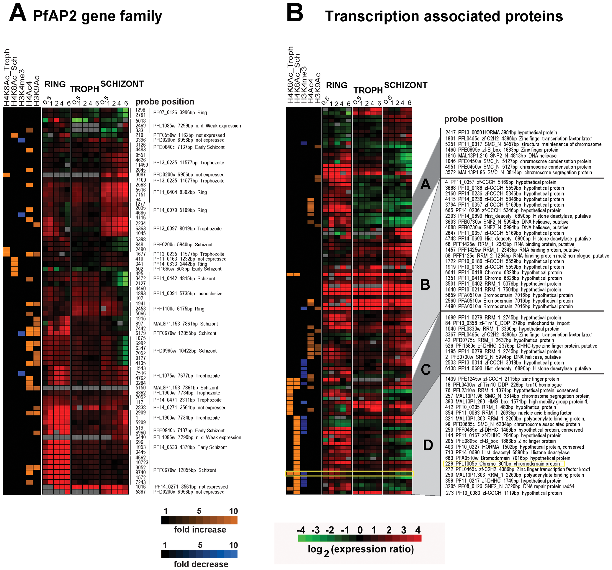Inhibition of HDACs induces expression of transcription associated proteins.