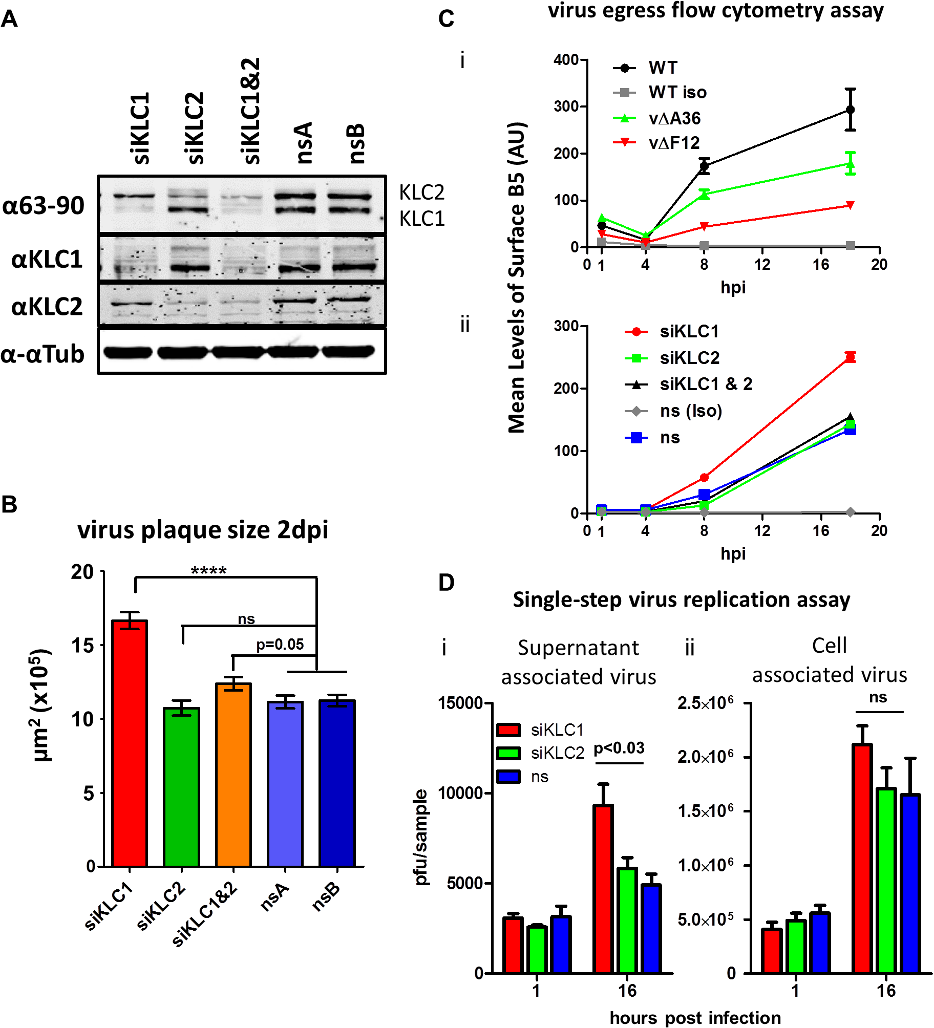 The effect of KLC knock-down by siRNA on virus egress.