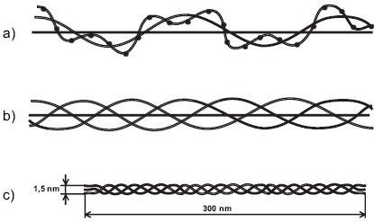 Skládání peptidových řetězců do kolagenní molekuly. a) peptidový řetězec (α řetězec), jehož primární struktura je daná pořadím aminokyselin (jeden bod znázorňuje jednu aminokyselinu), je stočen v prostoru kolem osy otáčení do levotočivé šroubovice; b) tři levotočivé peptidové řetězce jsou svinuty dohromady kolem centrální osy do kolagenní pravotočivé šroubovice; c) molekula tropokolagenu; na obou koncích molekuly se nacházejí nešroubovicové domény, tzv. telopeptidy.