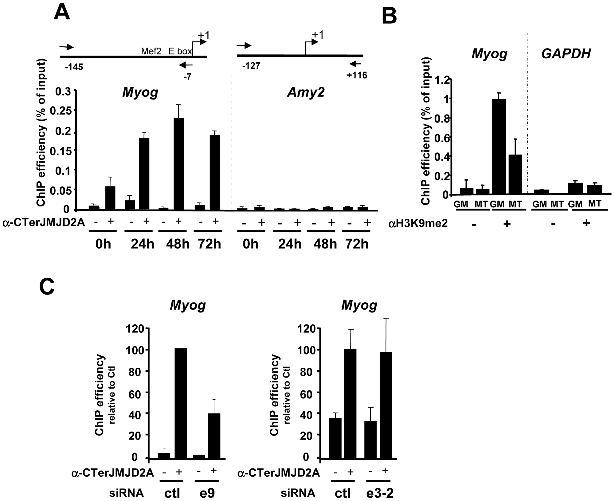 ΔN-JMJD2A is recruited to the myogenin promoter.