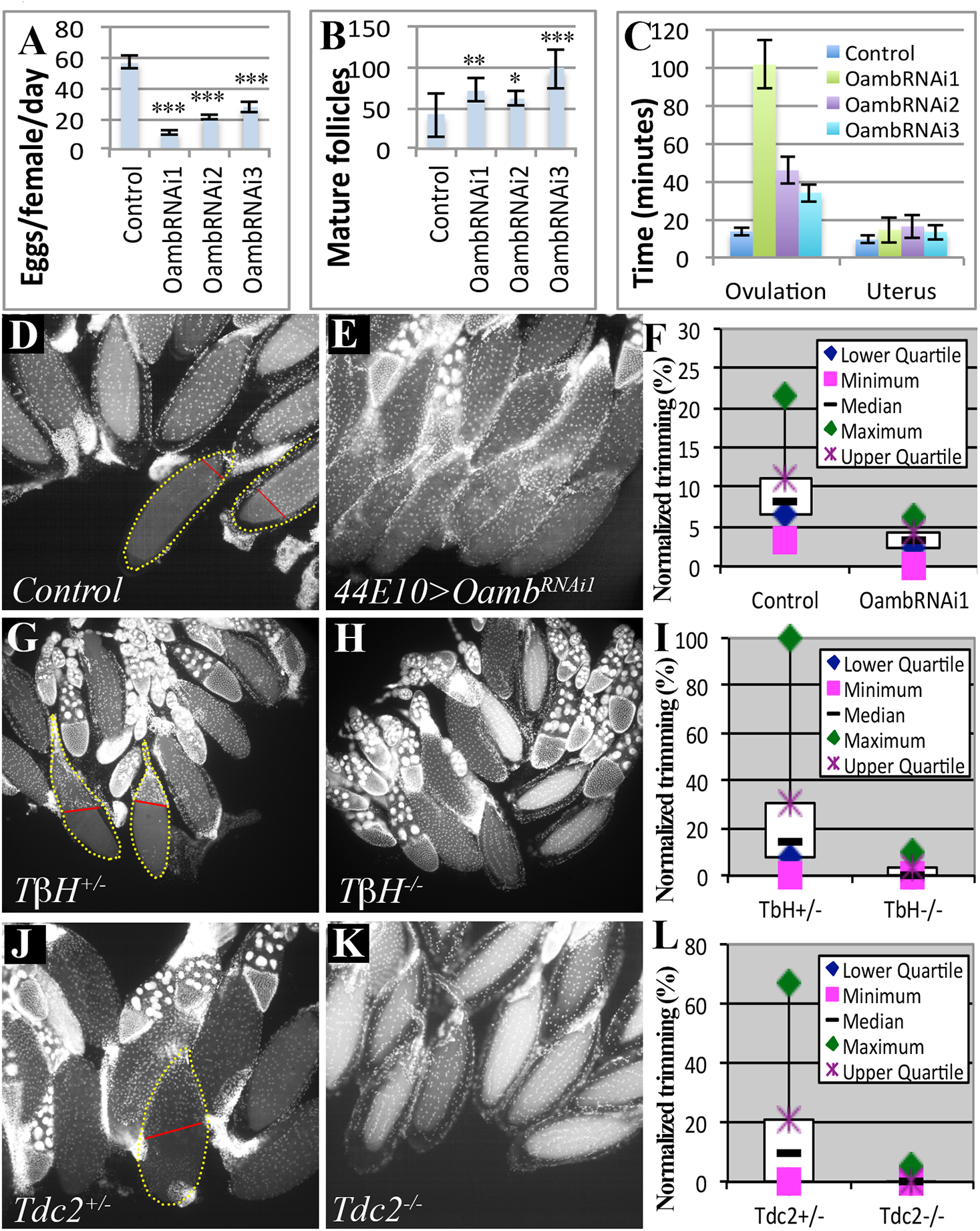 Follicular adrenergic signaling is required for ovulation and follicle cell trimming <i>in vivo</i>.