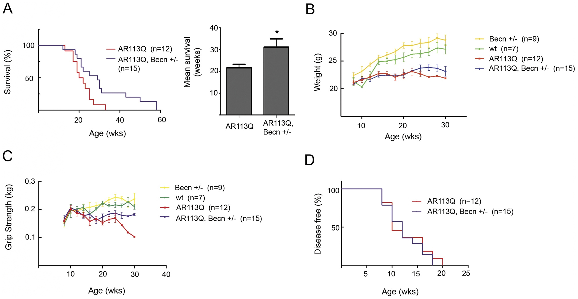 Beclin-1 haploinsufficiency extends lifespan in AR113Q males.