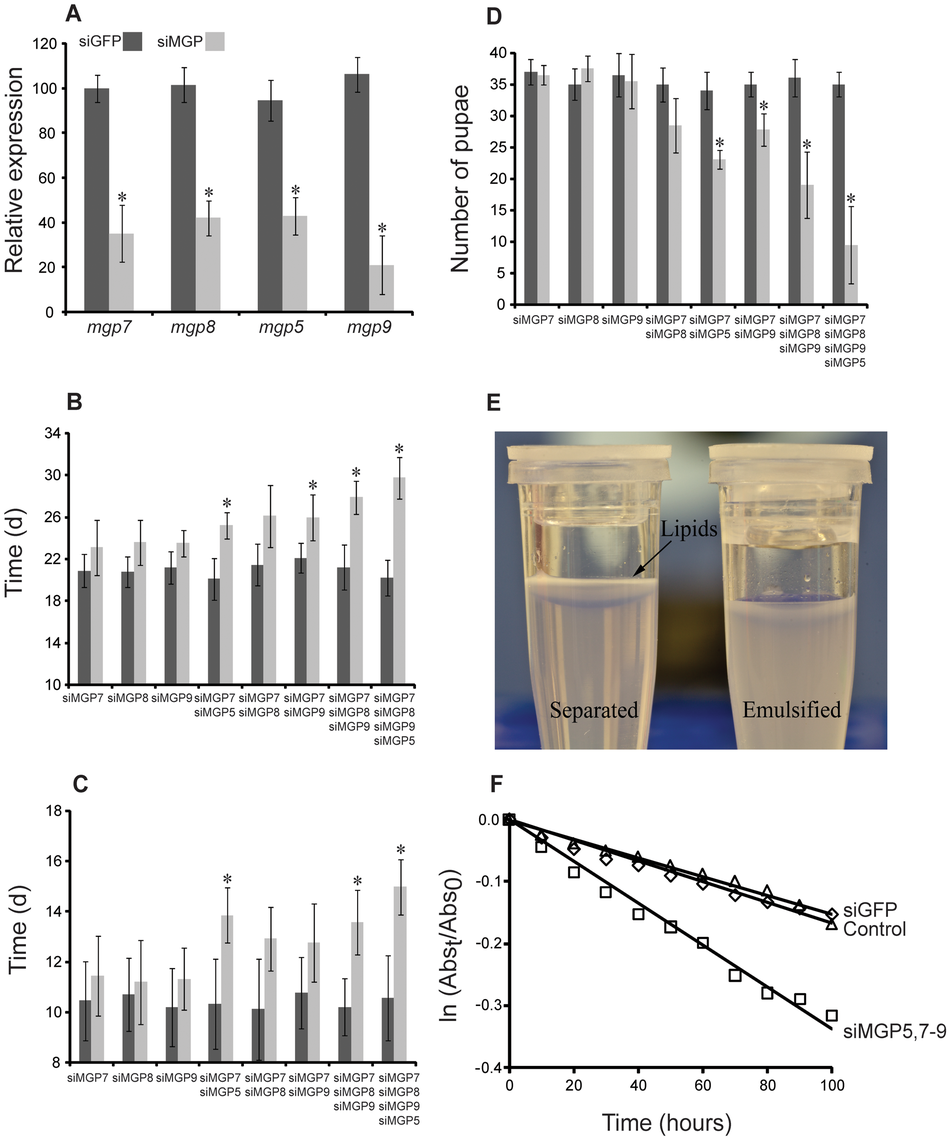 Phenotypes in lactating females following injection of MGP-specific siRNA.
