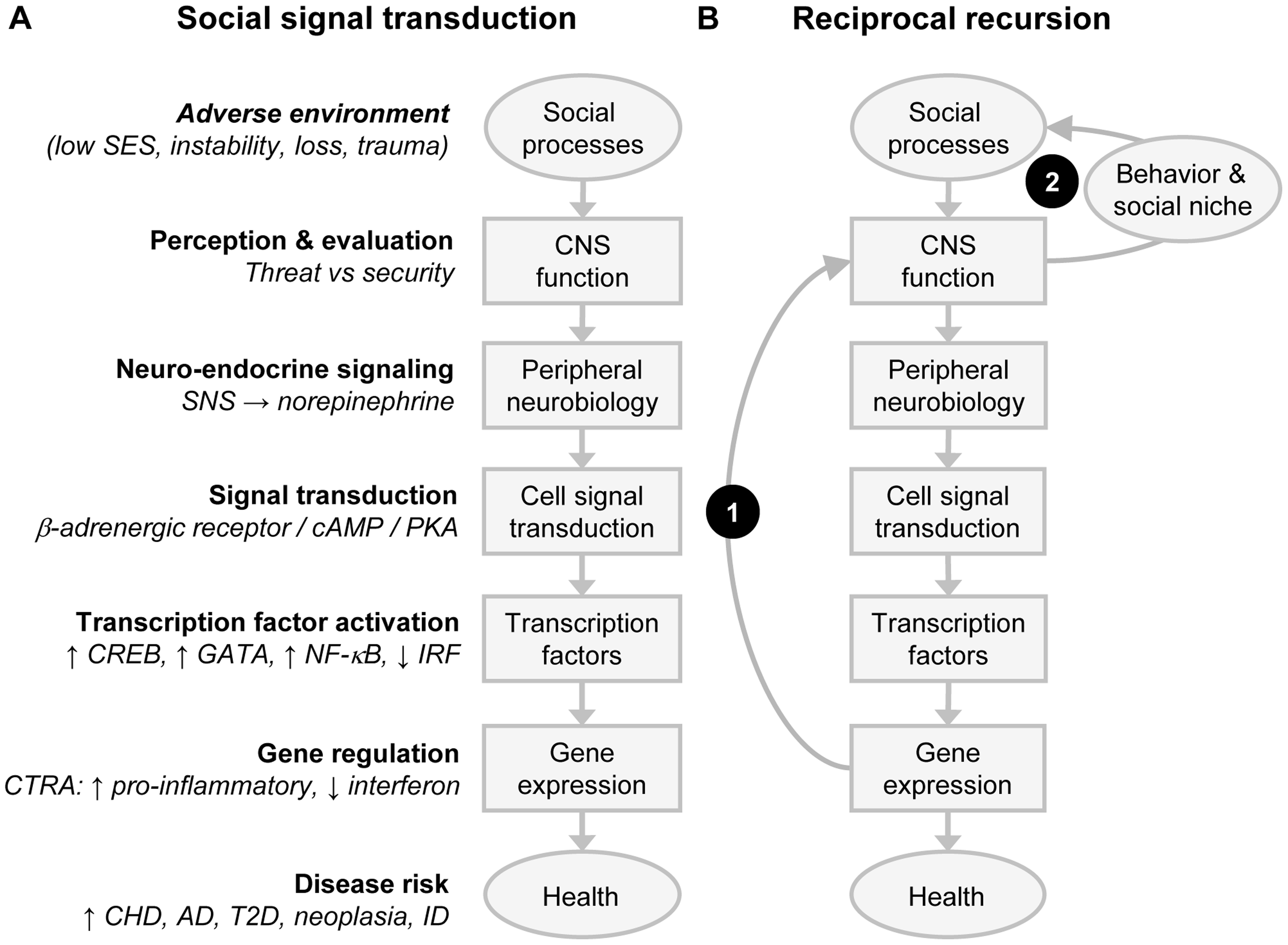 Social signal transduction and recursive network genomics.