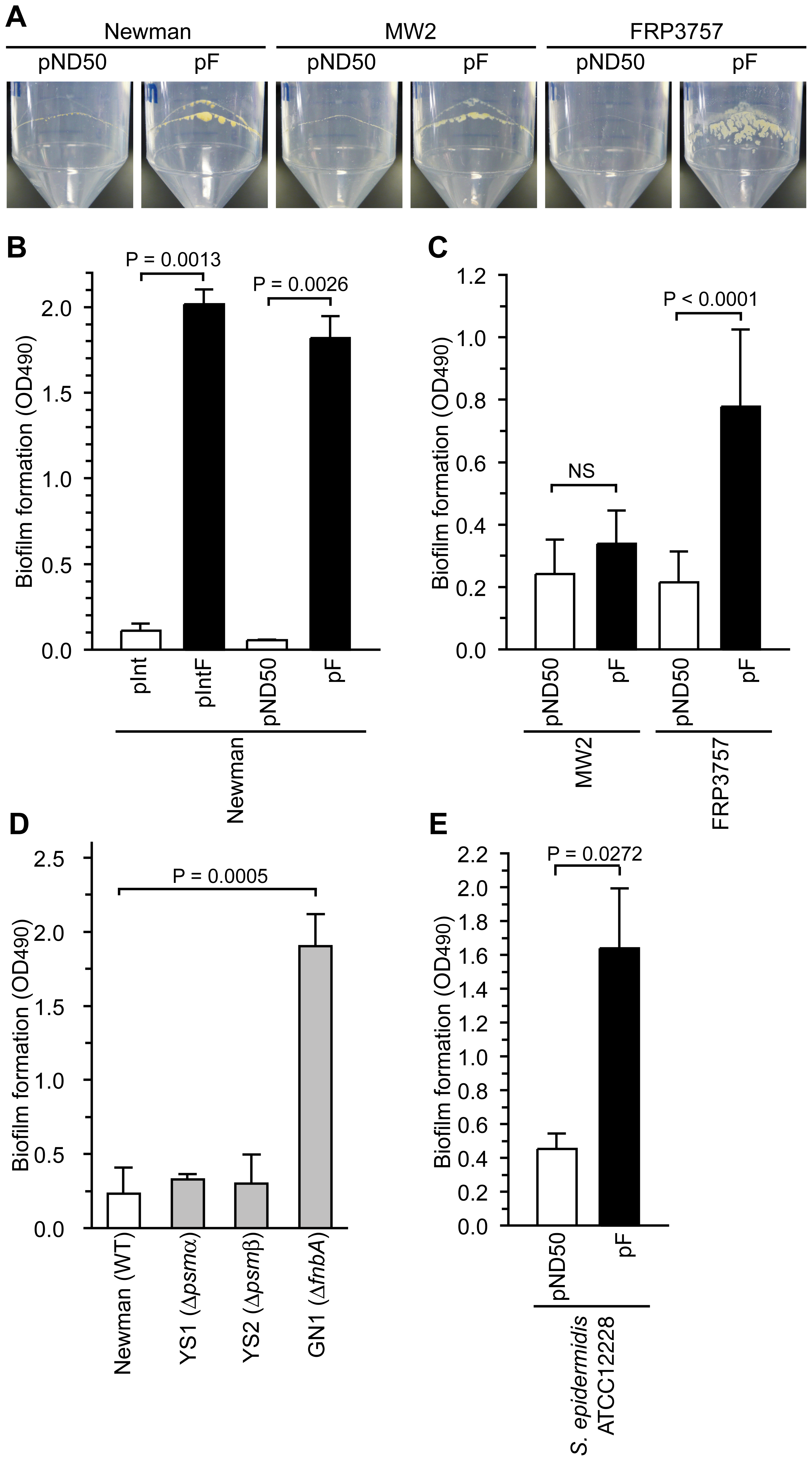 Introduction of the F region promotes biofilm formation.