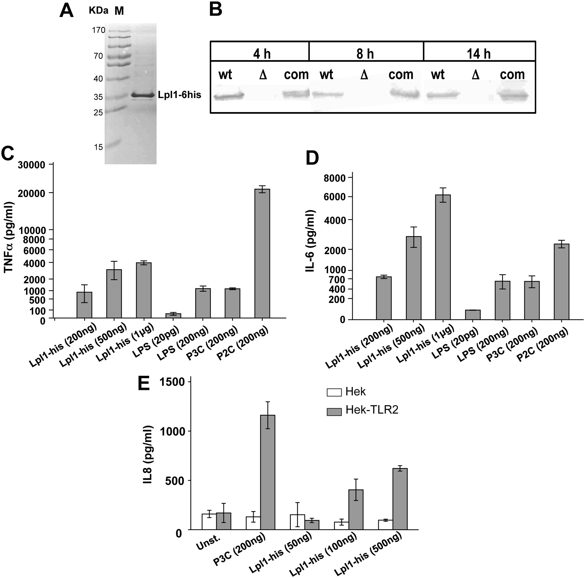 Induction of proinflammatory cytokines by purified Lpl1-his.