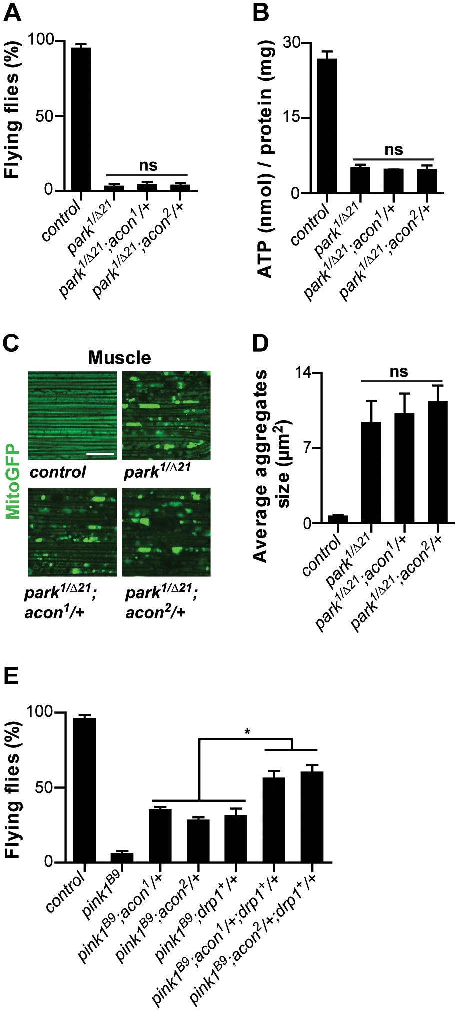 Acon inactivation and Parkin-mediated mitophagy act in parallel in <i>pink1</i> mutants.