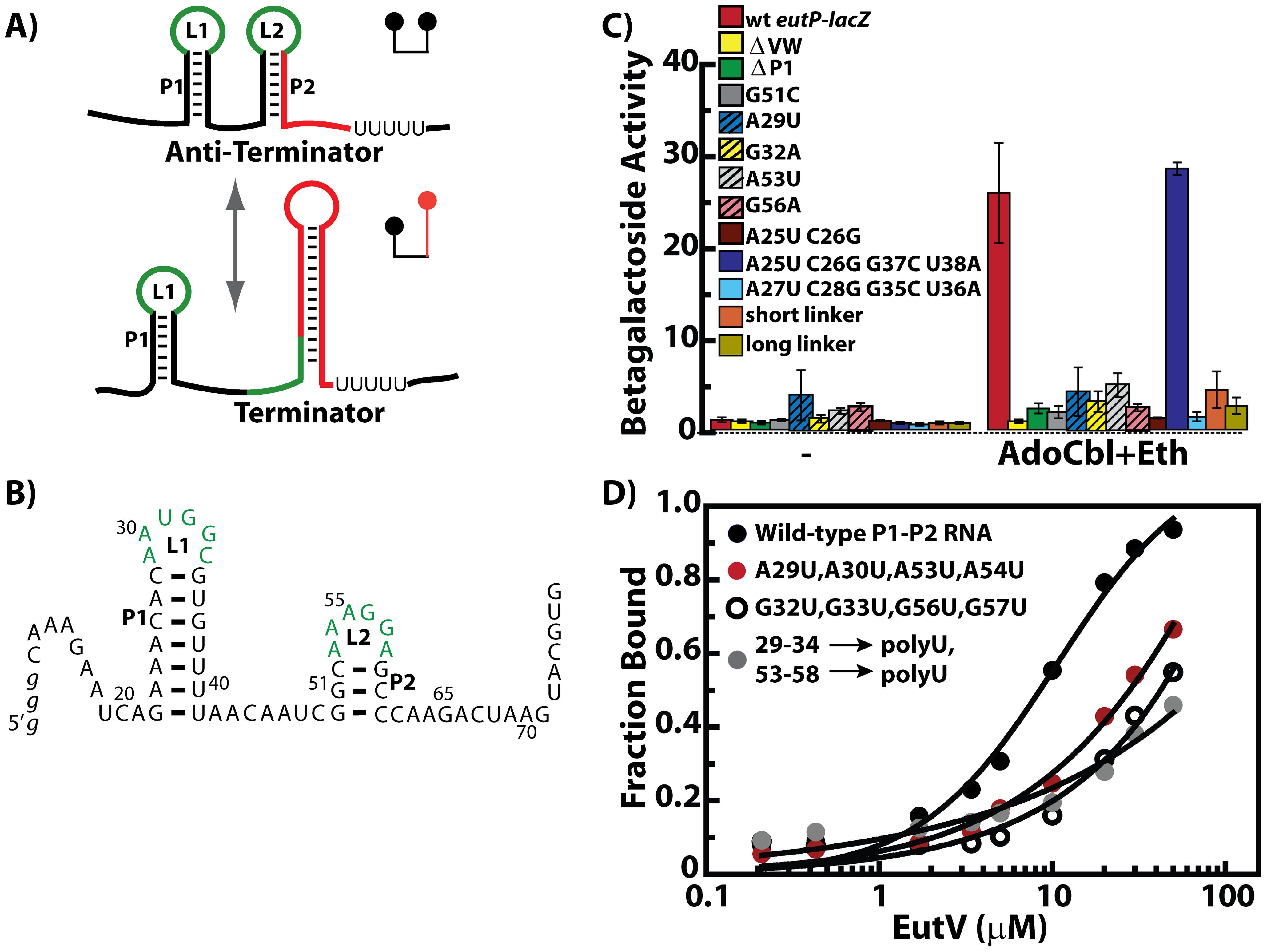 The EutV ANTAR regulator specifically recognizes a dual hairpin RNA motif.