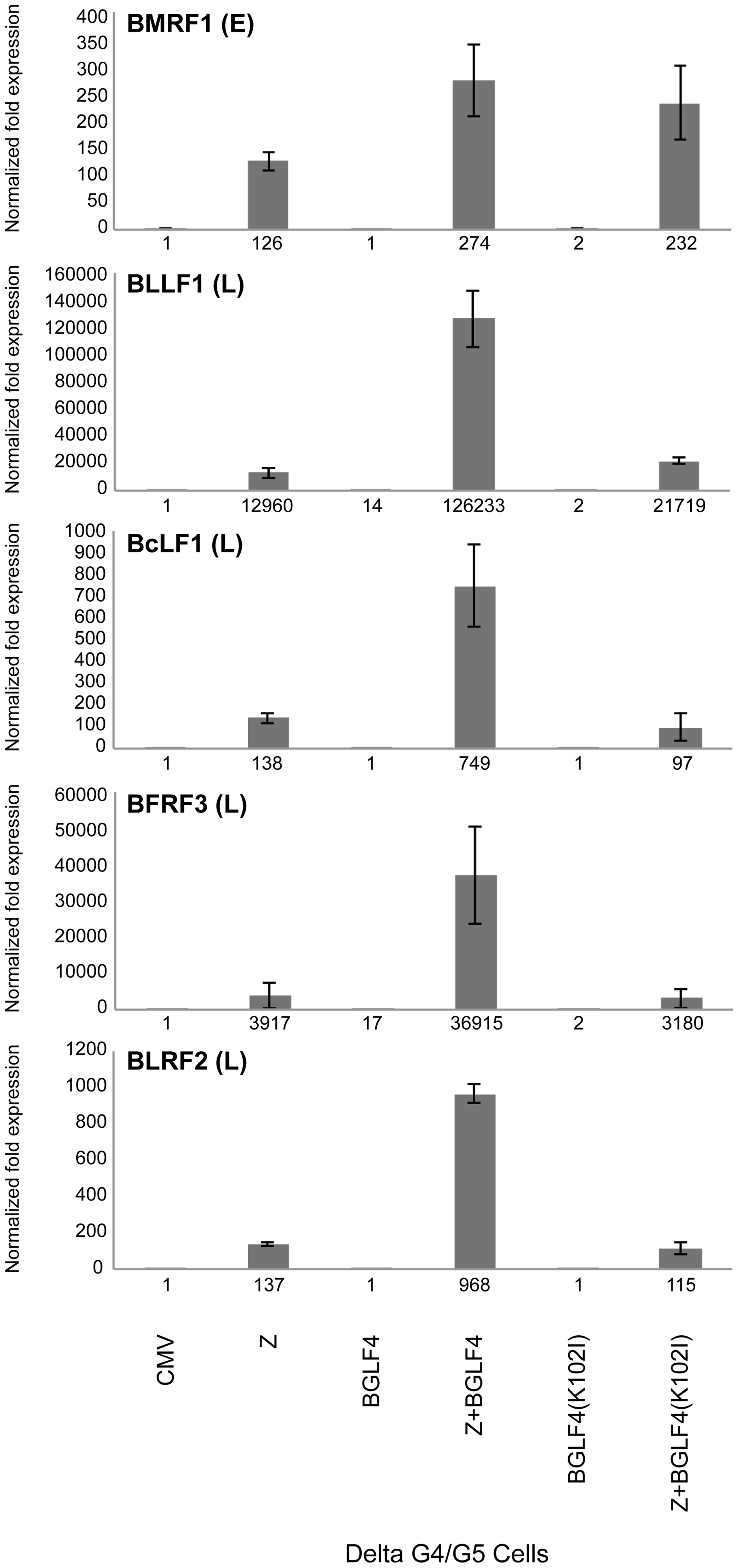 Expression of BGLF4 significantly up-regulates the level of late transcripts.