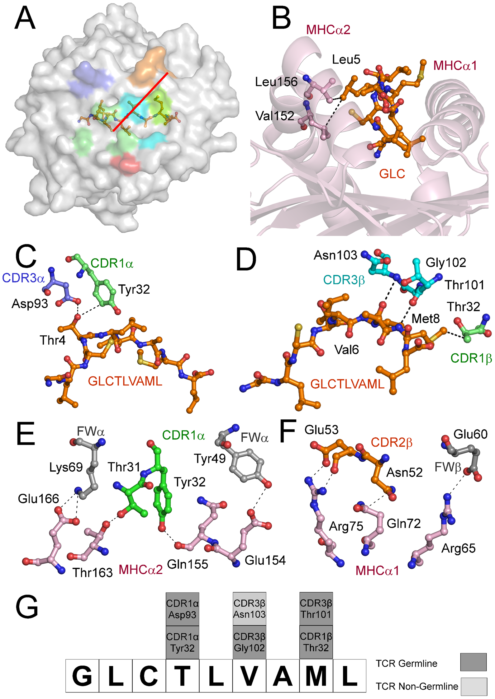 Interactions of the AS01-GLC-A2 complex.