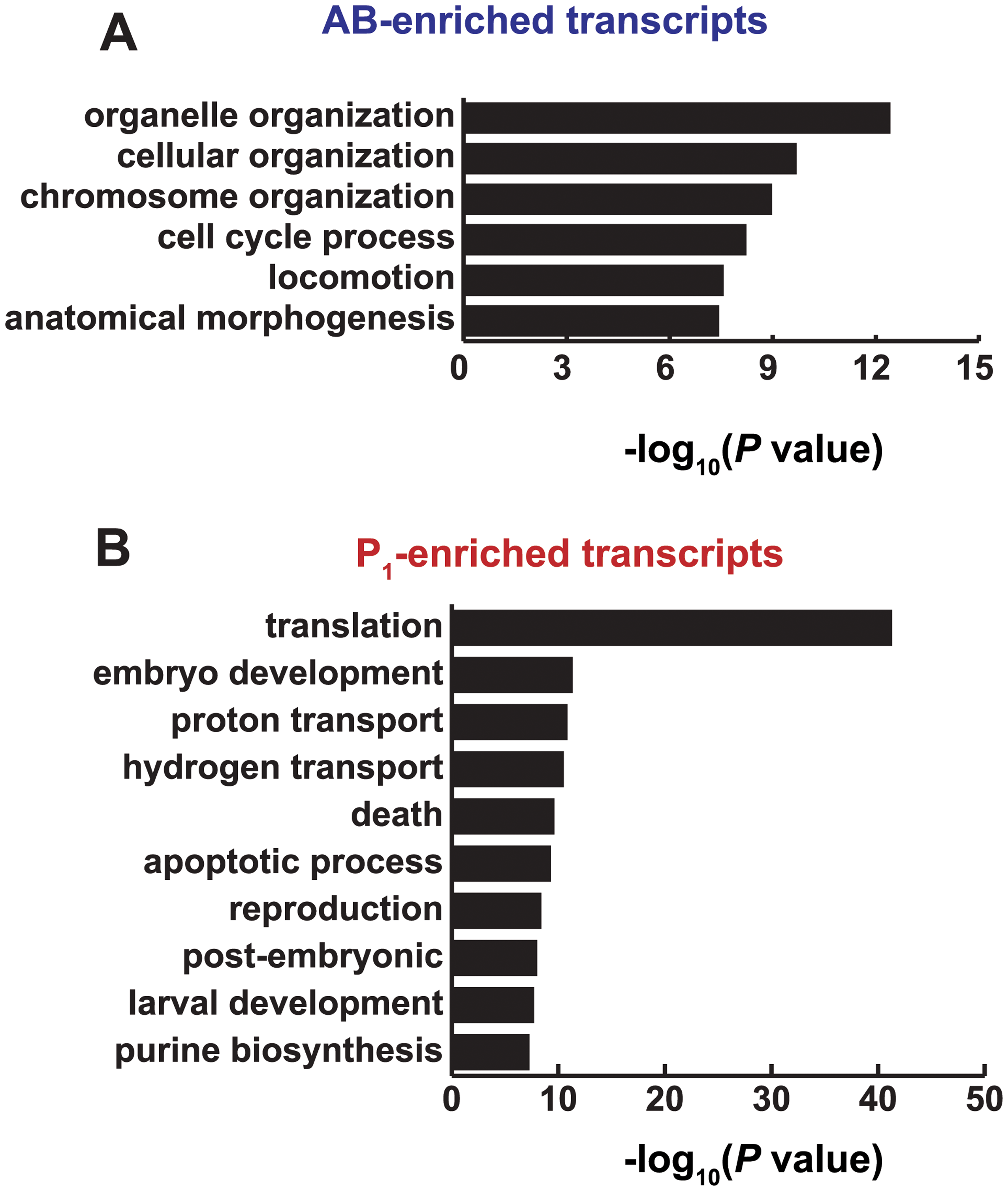 Functions associated with AB and P<sub>1</sub>-enriched transcripts.