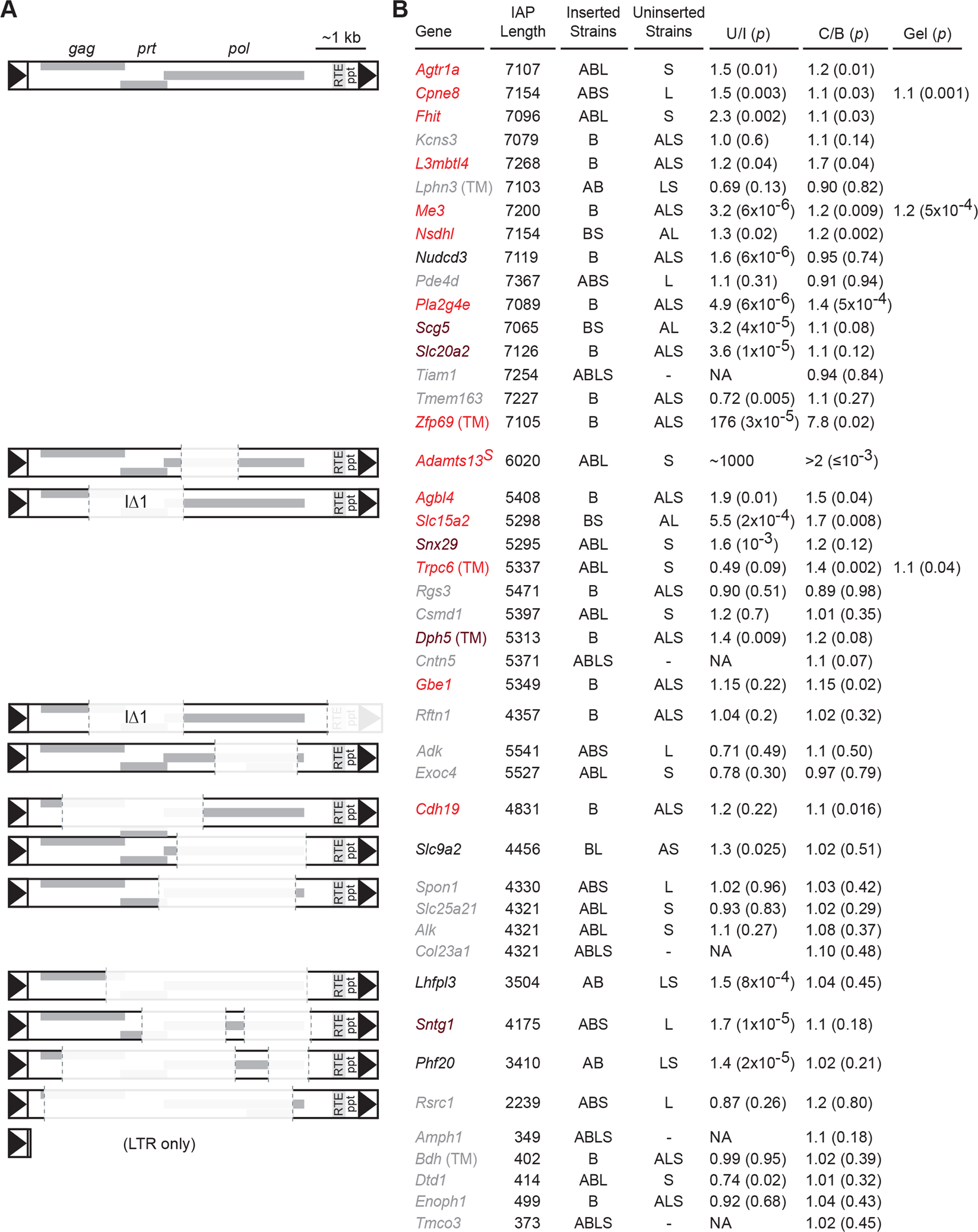 <i>Nxf1</i><sup><i>CAST</i></sup> congenic allele suppresses a diversity of IAP elements in the B6 genome.