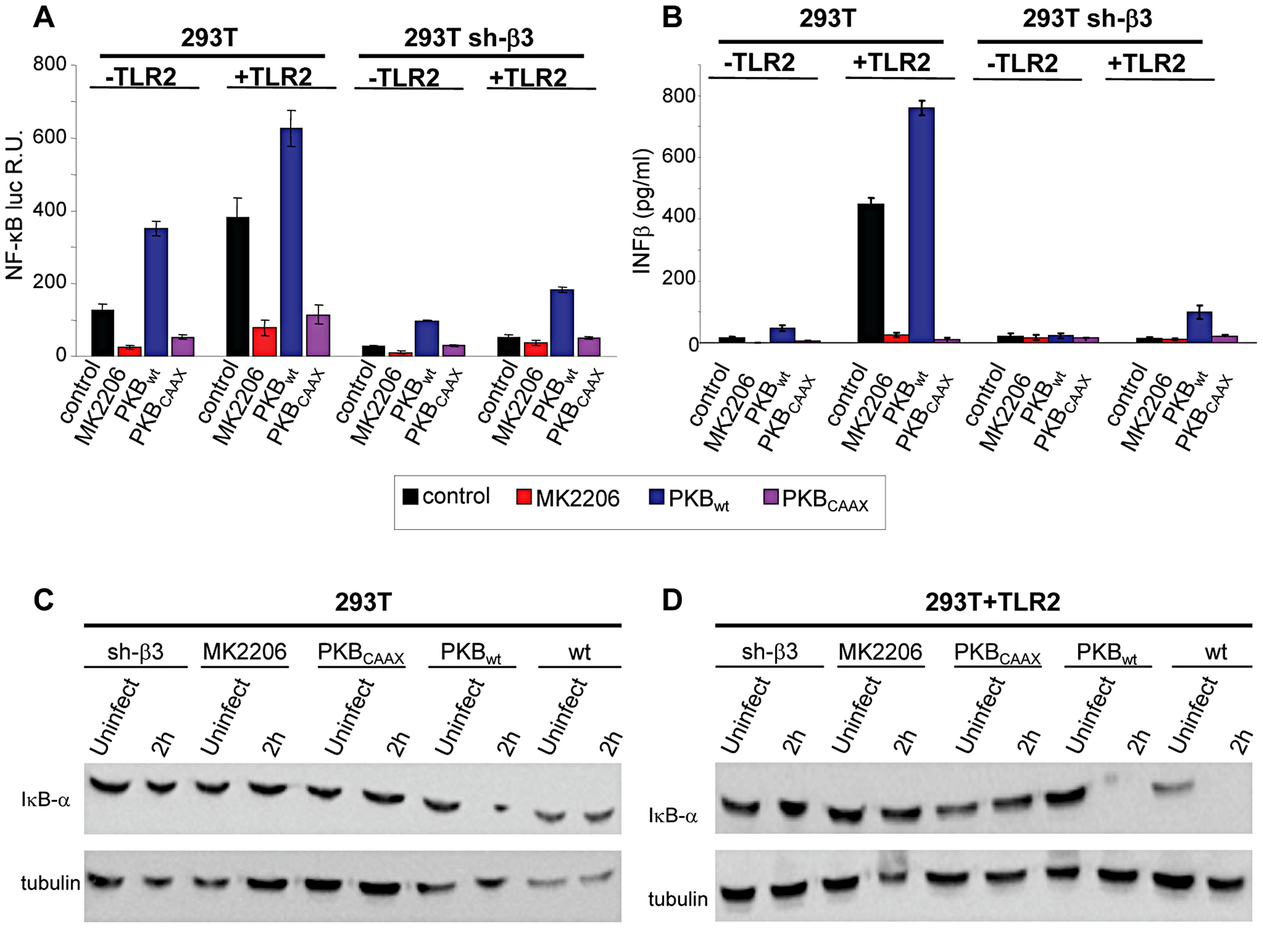 Inhibition od Akt reduces the innate response to HSV.