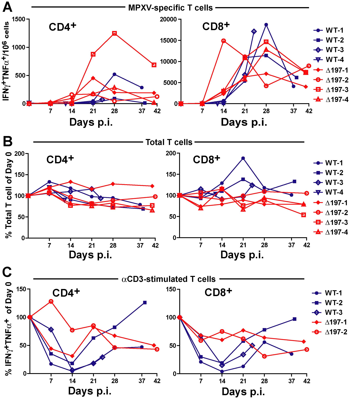MPXV197 suppresses T cell responses <i>in vivo</i>.