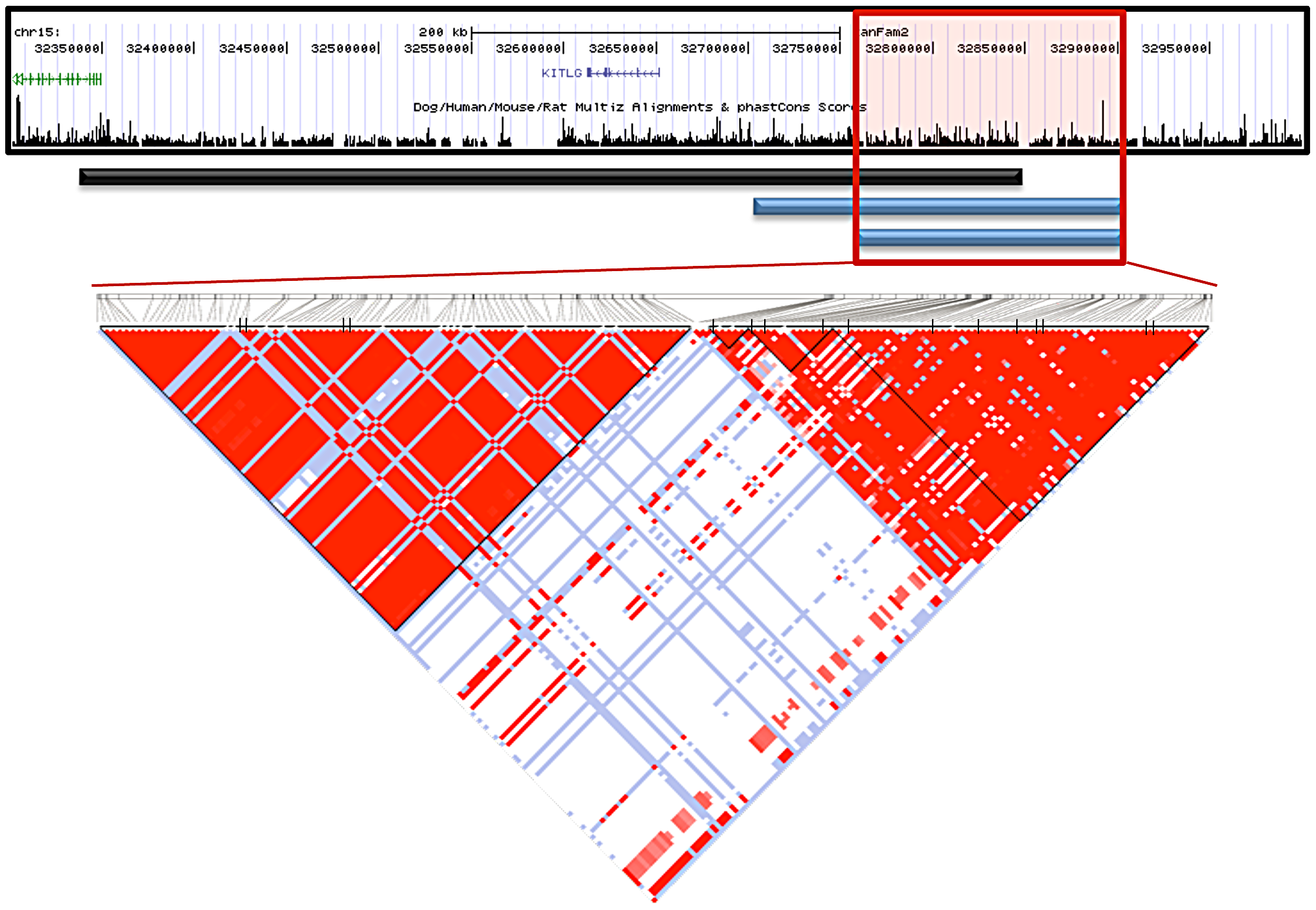 Interbreed haplotype analysis refines the SCCD locus to 144.9 Kb.