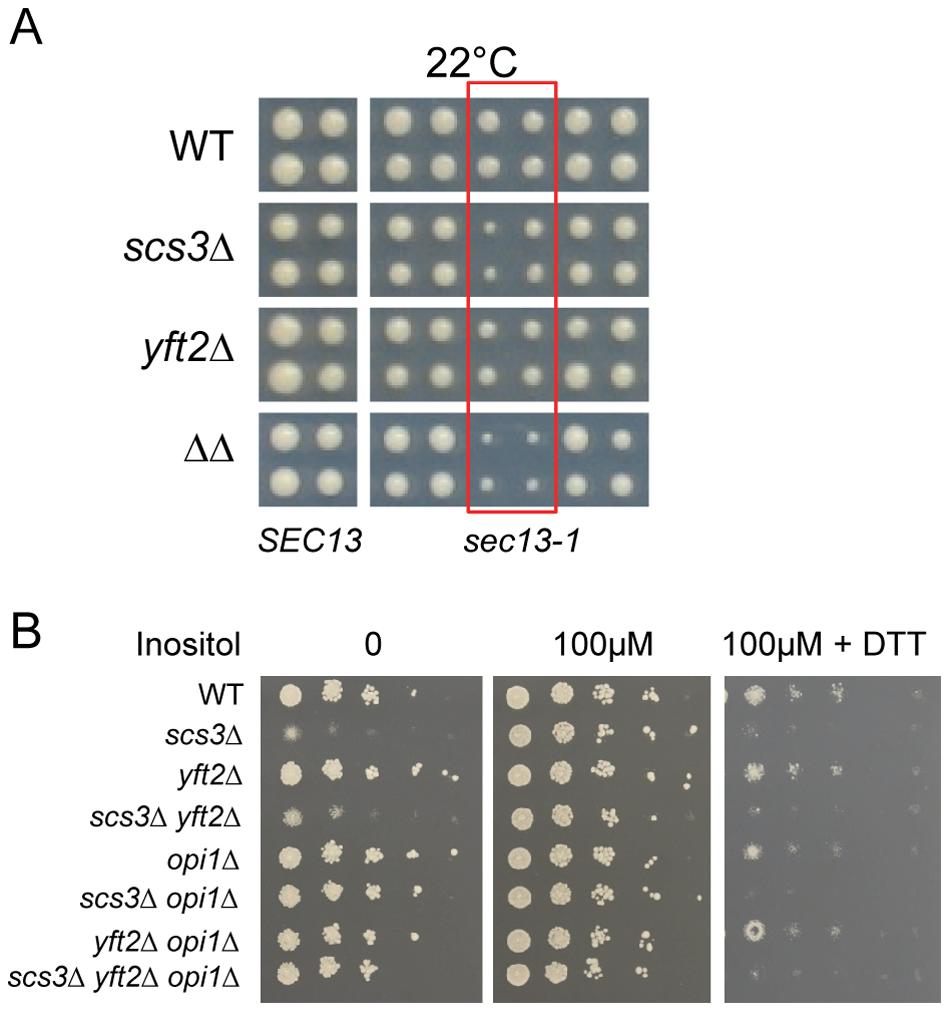 Hypersensitivity of <i>SCS3</i> and <i>YFT2</i> deletion strains to secretory/ER stress.