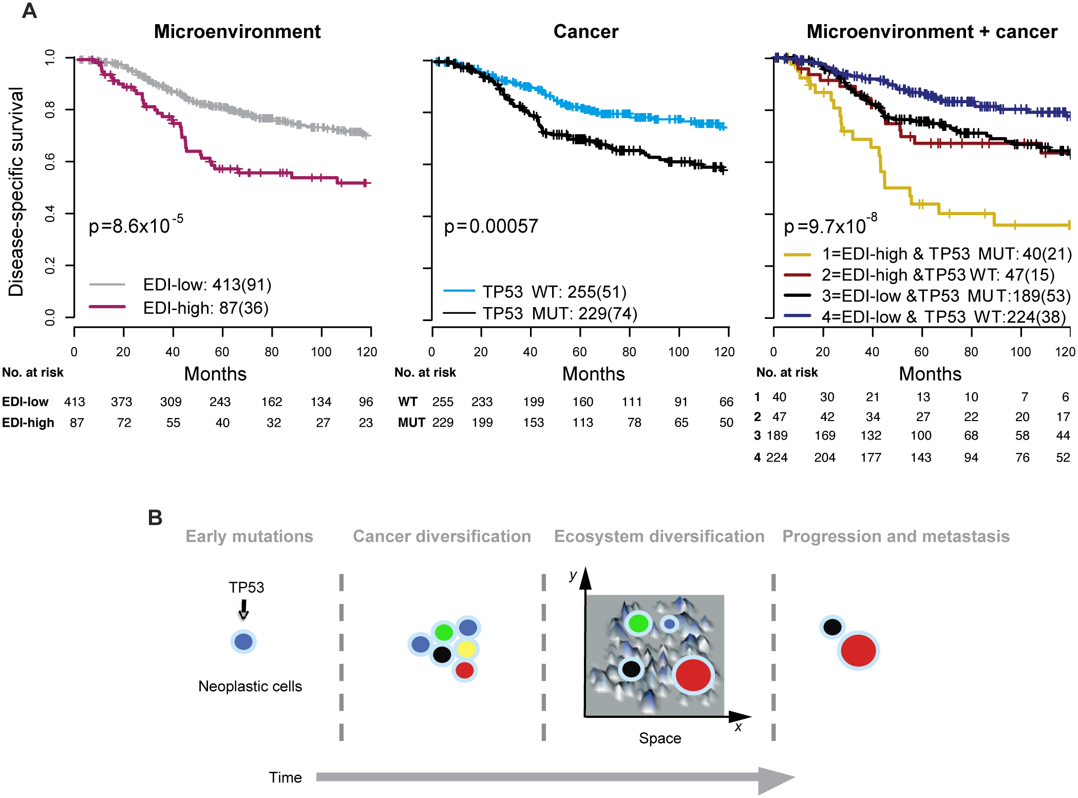 Accumulated prognostic value of microenvironmental heterogeneity and cancer <i>TP53</i> mutation in high-grade breast tumors.