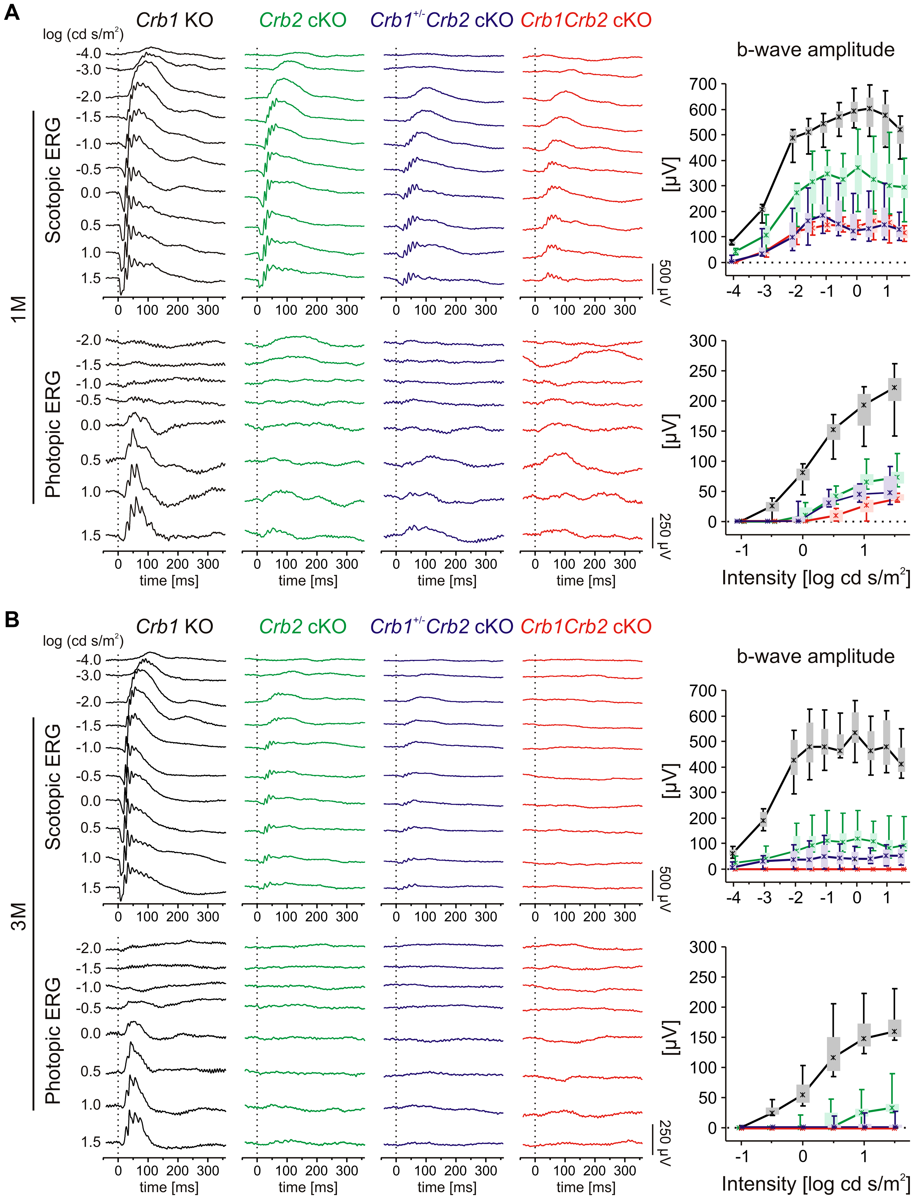 Retinal function in <i>Crb1Crb2</i> mutant retinas is severely impaired.
