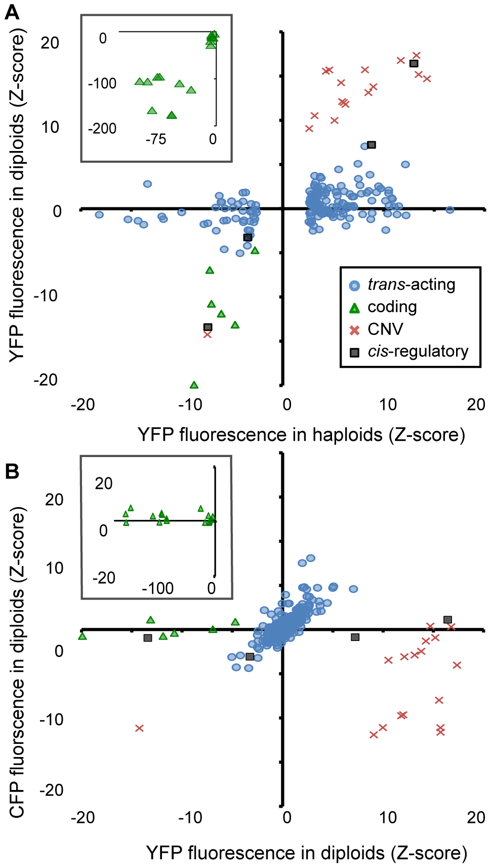 Effects of heterozygous mutant alleles on YFP and CFP fluorescence differ among mutational classes in diploid cells.