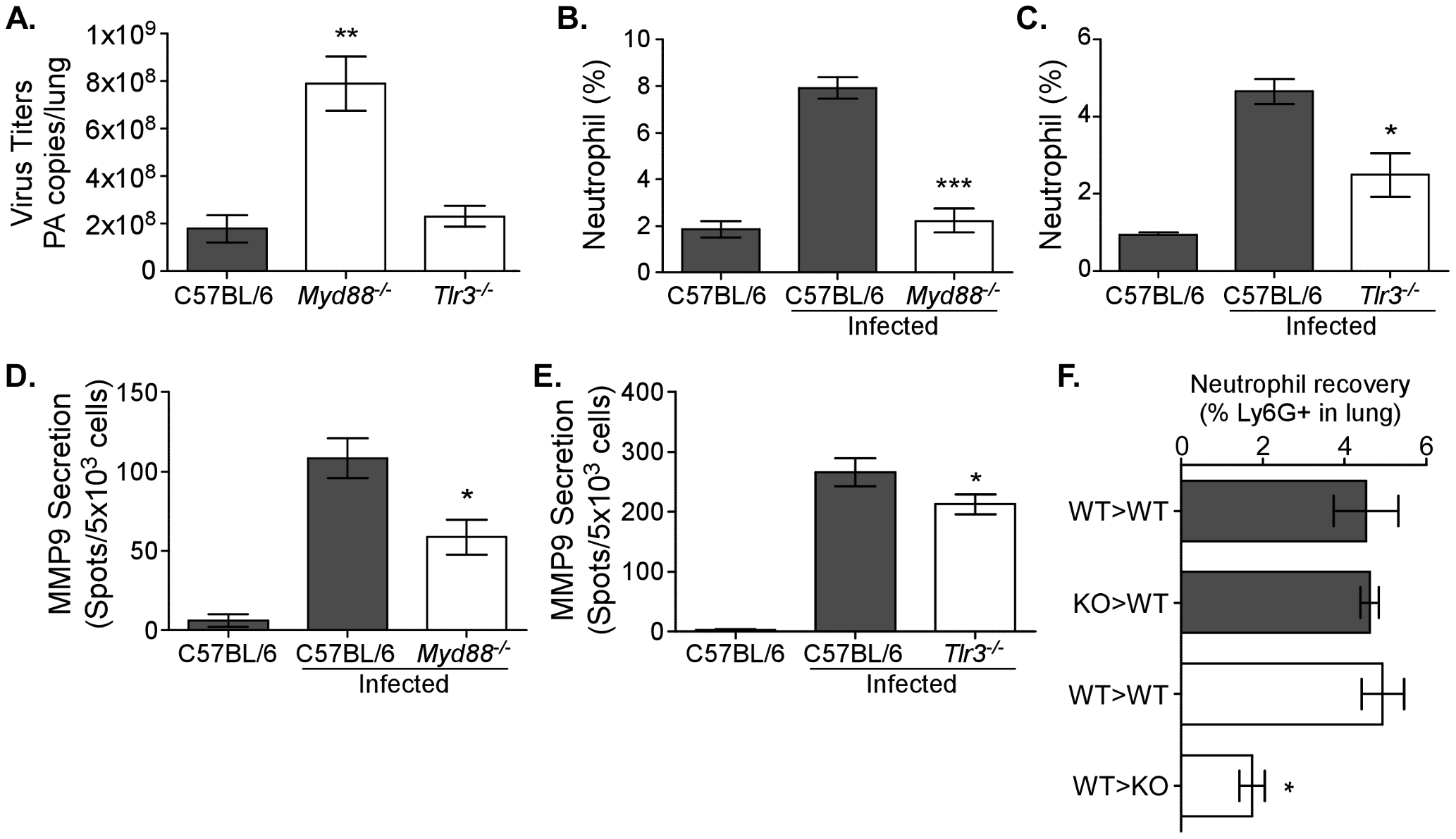 Neutrophil recruitment, MMP9 secretion, and viral load are TLR-dependent.