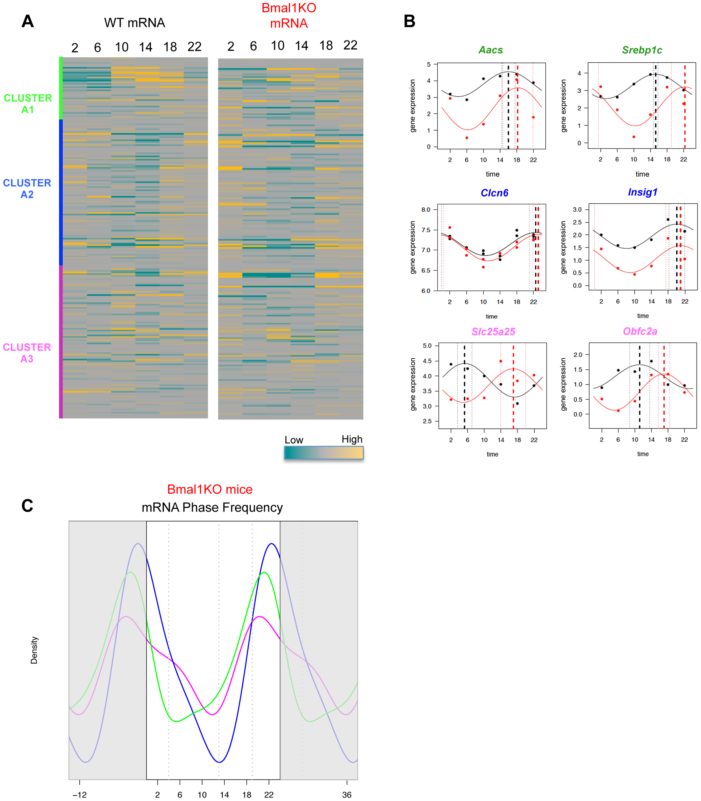 Phase of expression of rhythmic SREBP1 target genes is perturbed in <i>Bmal1<sup>−/−</sup></i> upon time-restricted feeding.