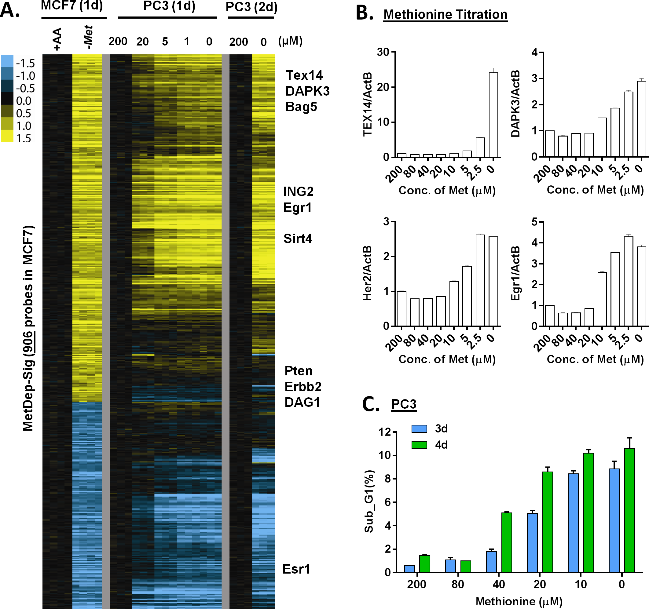 The transcriptional response of methionine deprivation between breast and prostate cancer cells.