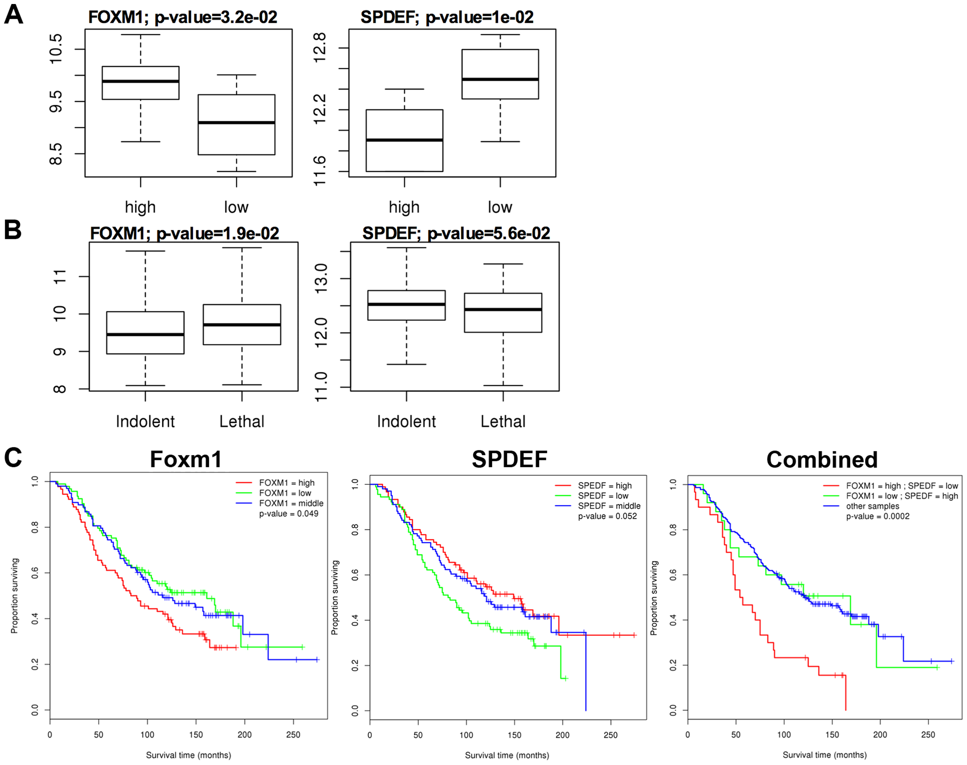 <i>SPDEF</i> expression is inversely correlated with <i>Foxm1</i> expression in human prostate cancer and of prognostic value for the prostate carcinoma patient survival.